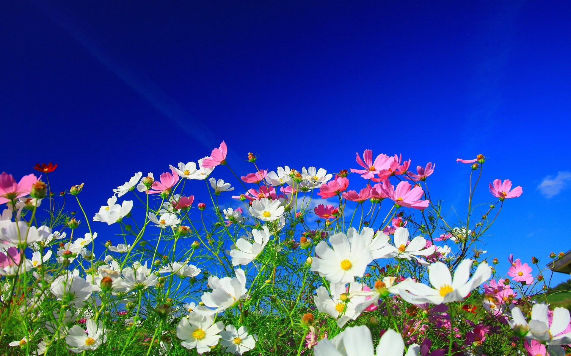Sfondi : luce del sole colorato fiori rosa natura cielo