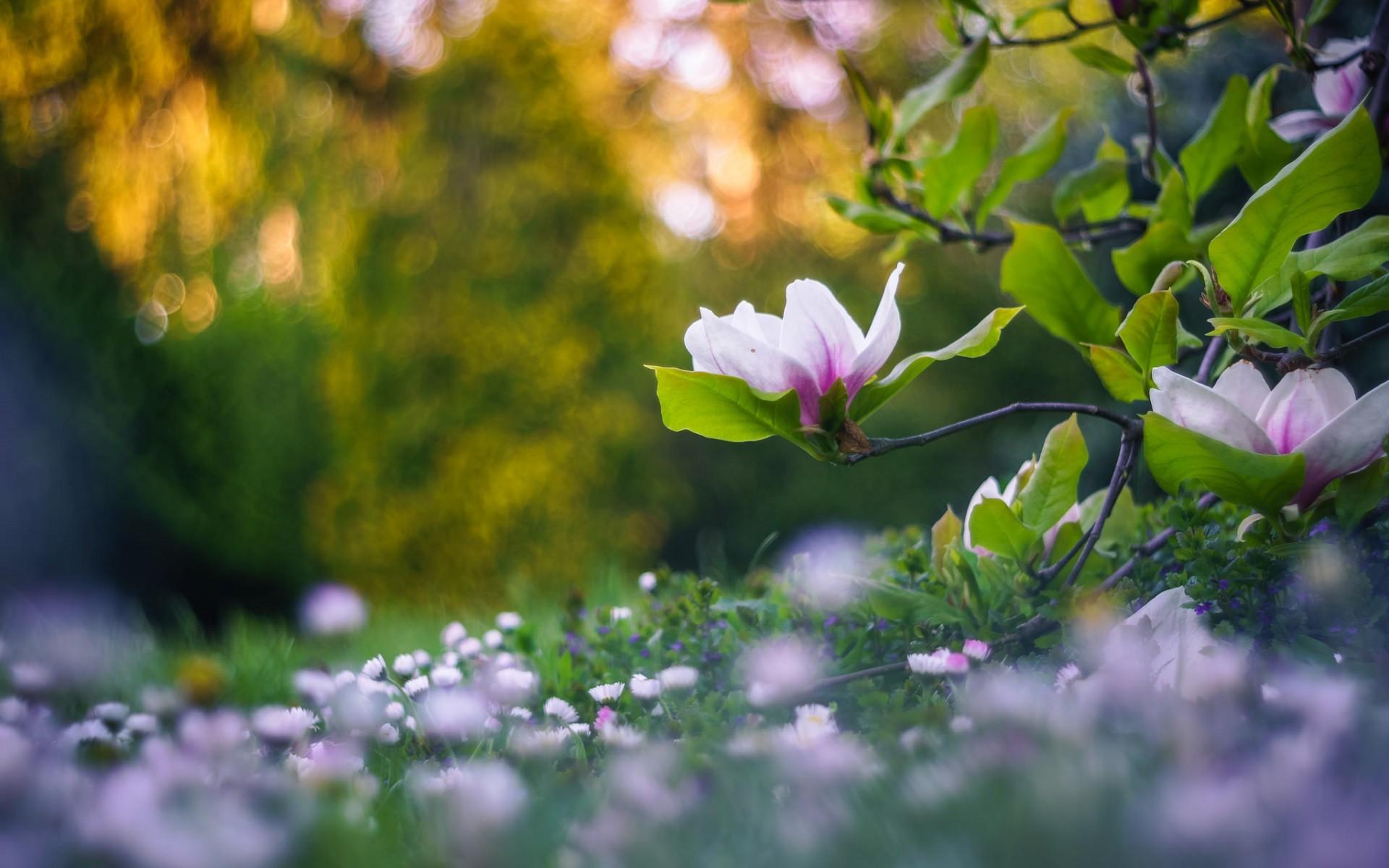Wallpaper Sunlight Depth Of Field Flowers Garden