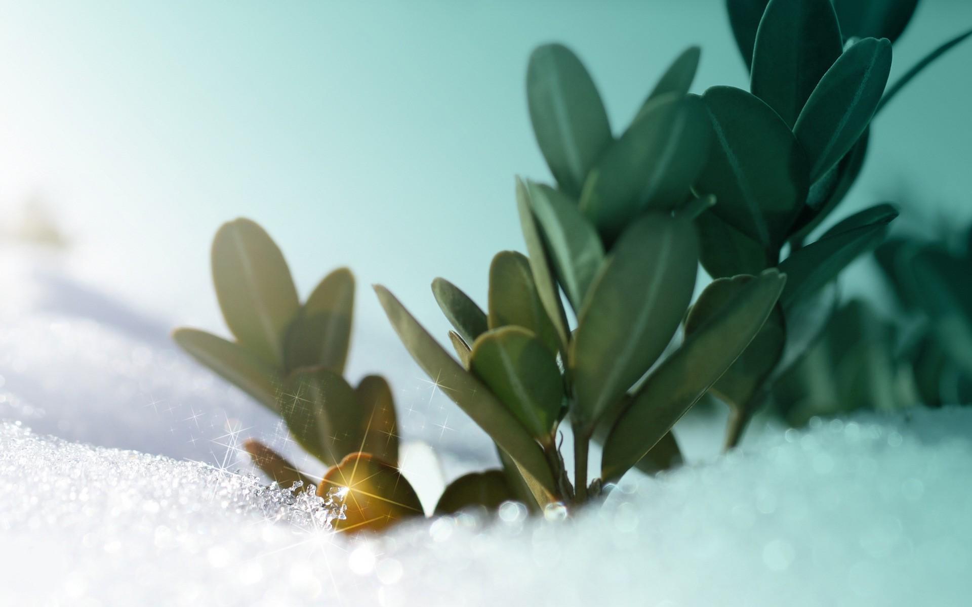 hintergrundbilder sonnenlicht digitale kunst pflanzen schnee winter ast gr n bl hen. Black Bedroom Furniture Sets. Home Design Ideas