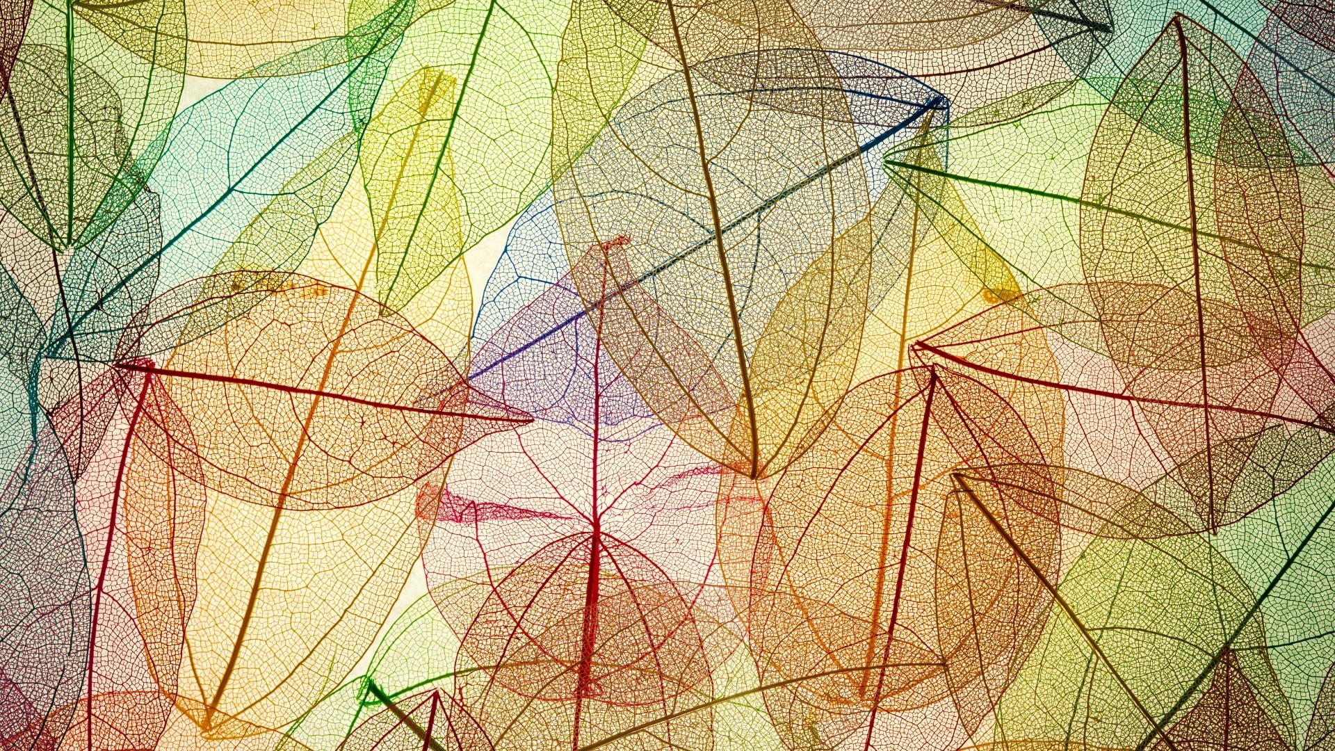 Fondos de pantalla : luz de sol, dibujo, vistoso, otoño, hojas ...