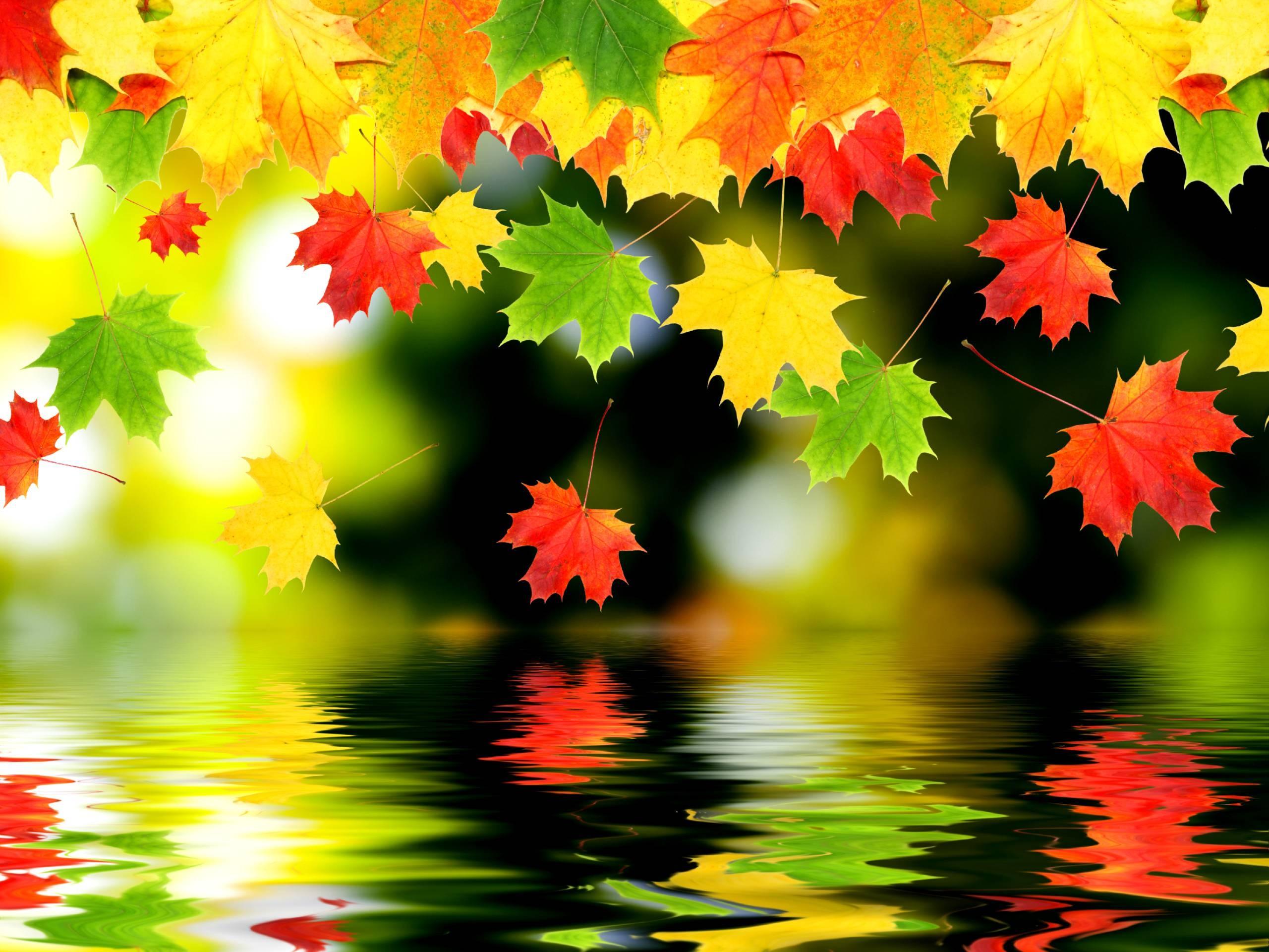 Wallpaper : sunlight, fall, leaves, digital art, water, red, branch ...