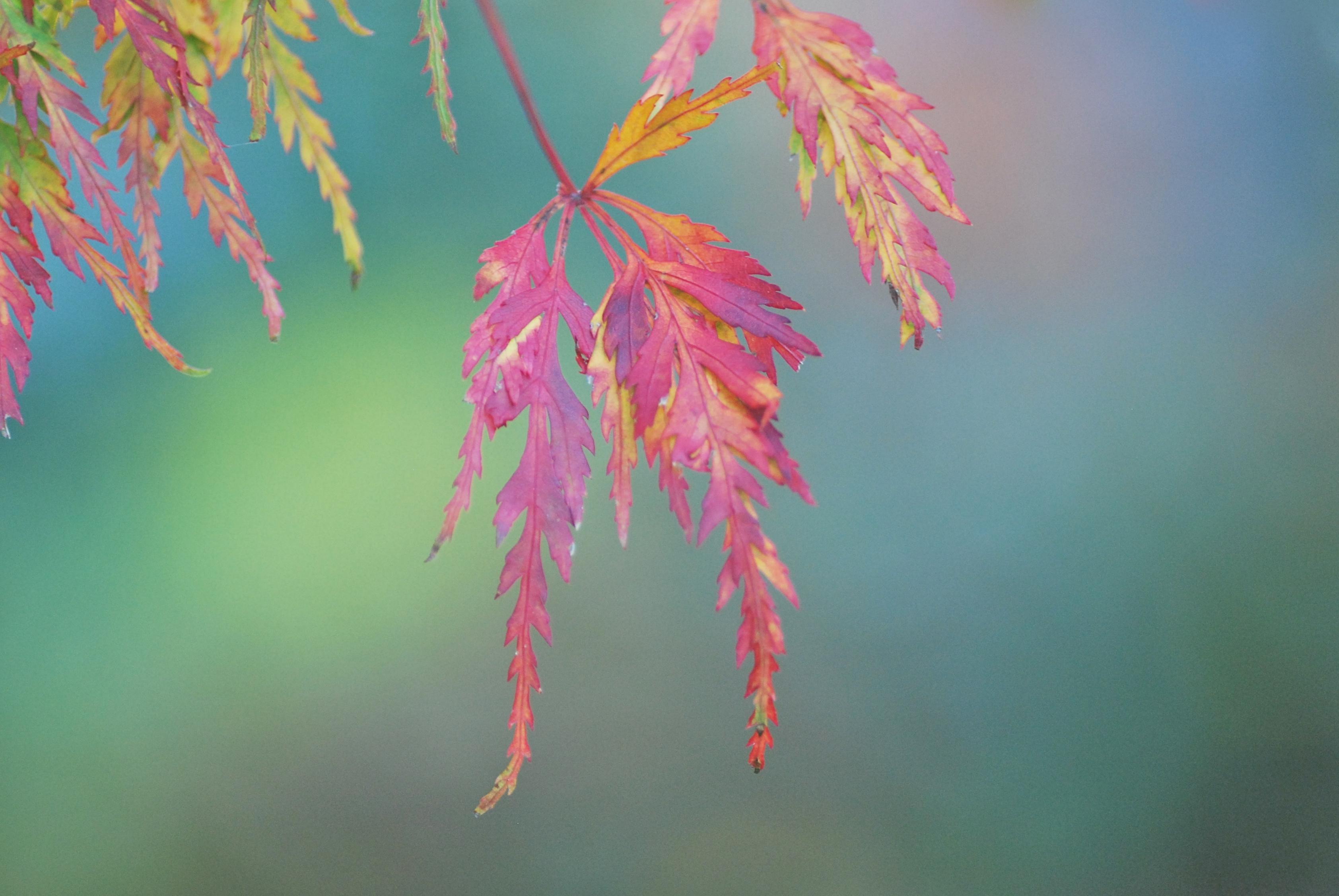 Fondos de pantalla : luz de sol, otoño, hojas, naturaleza, rojo ...