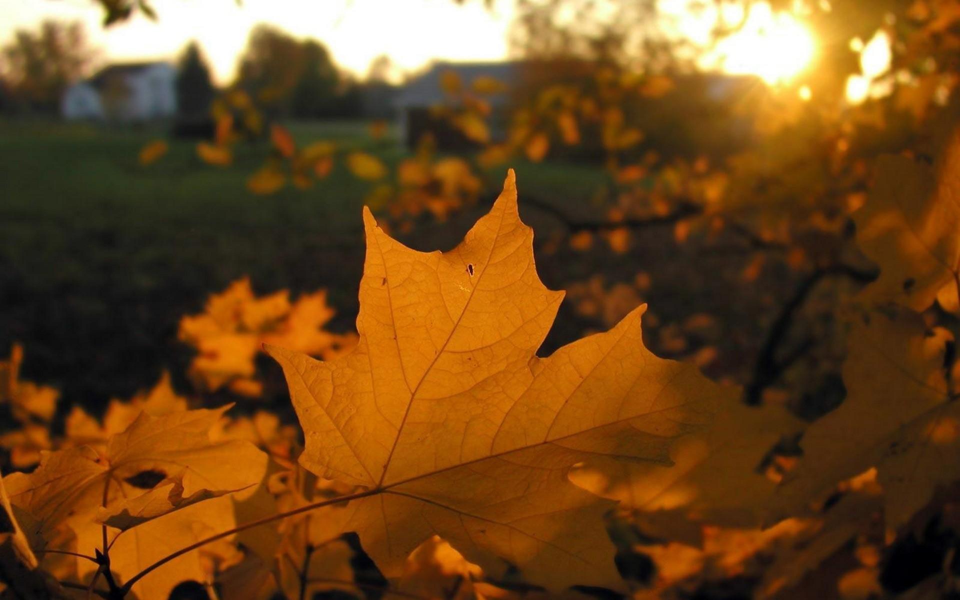 картинка улетающие листья как второй