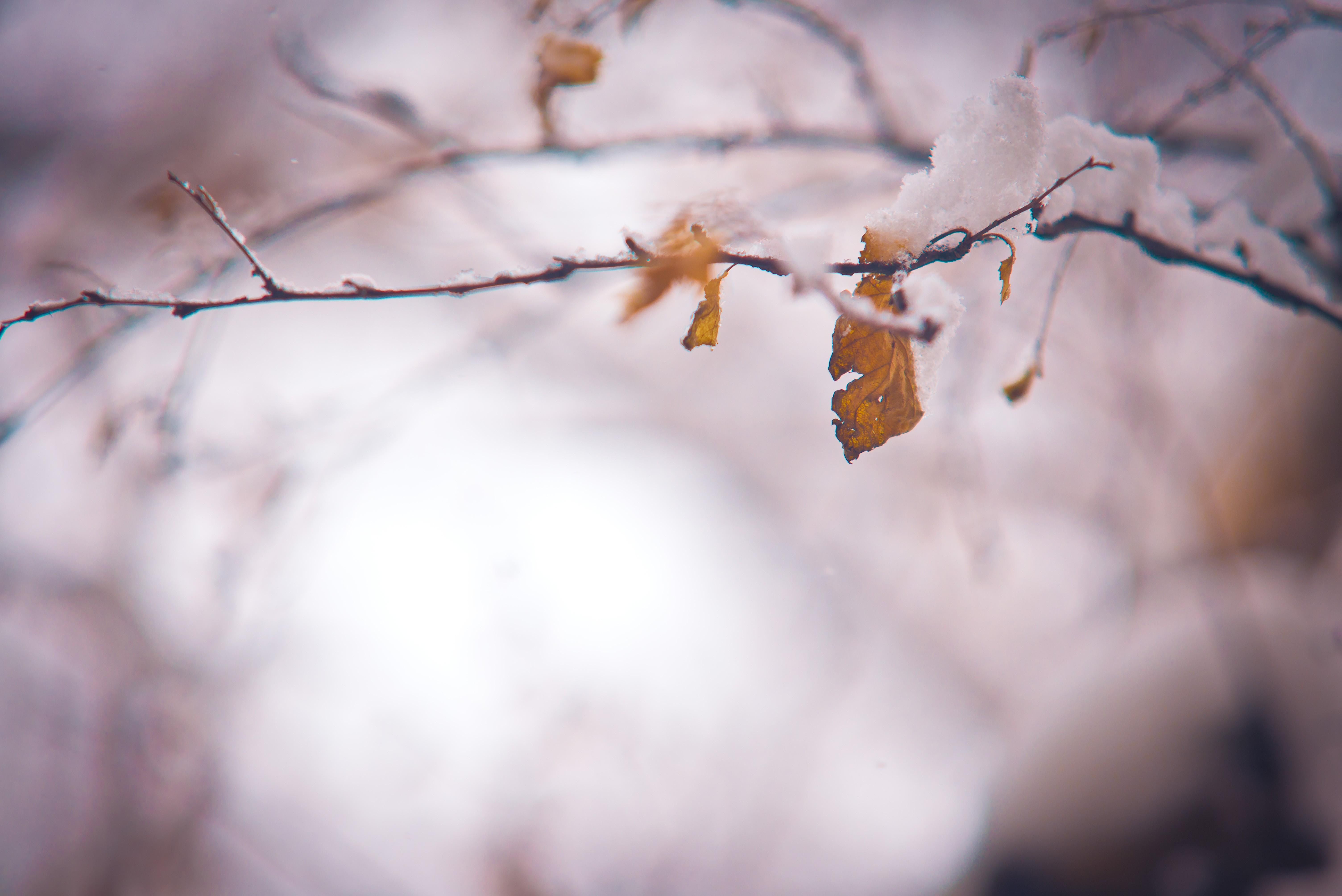 Картинка рамка поздняя осень