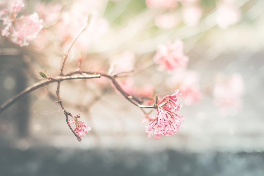 fond d 39 cran lumi re du soleil fleurs jardin la nature rouge la photographie fermer. Black Bedroom Furniture Sets. Home Design Ideas