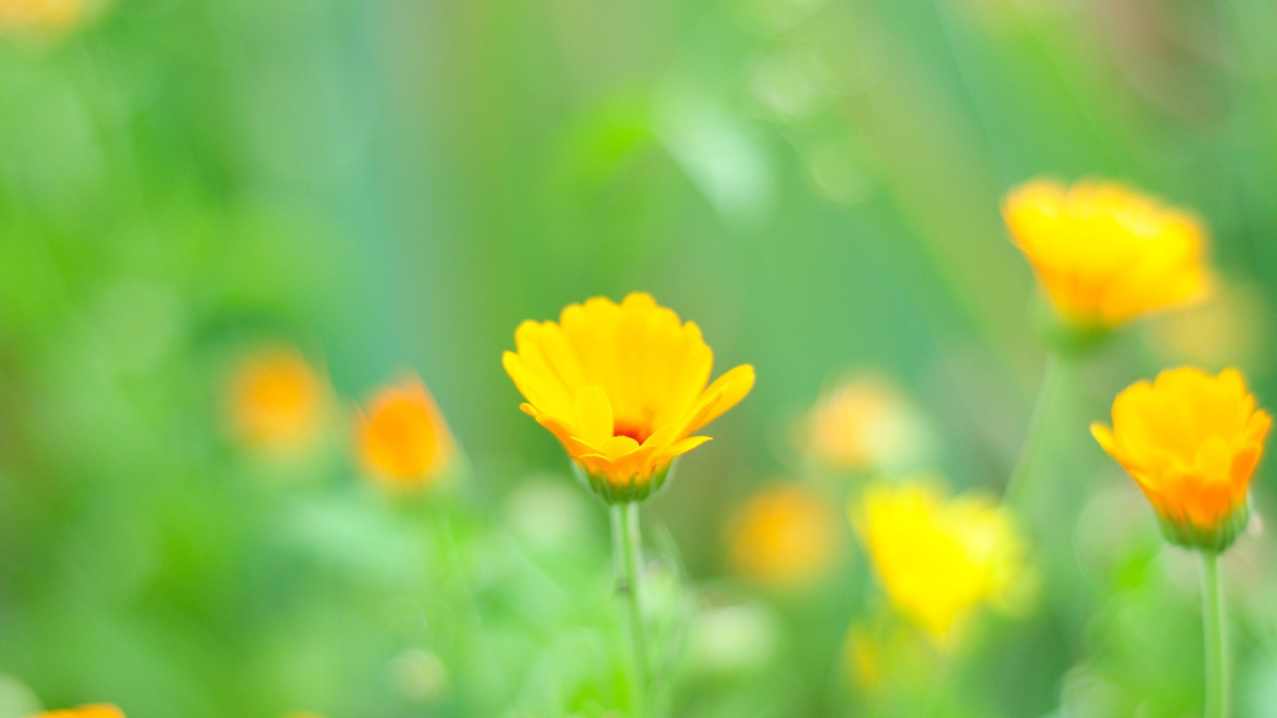 Wallpaper : sunlight, flowers, grass, field, yellow, morning