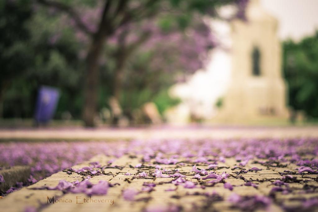 Fondos de pantalla : luz de sol, Flores, césped, parque, púrpura ...