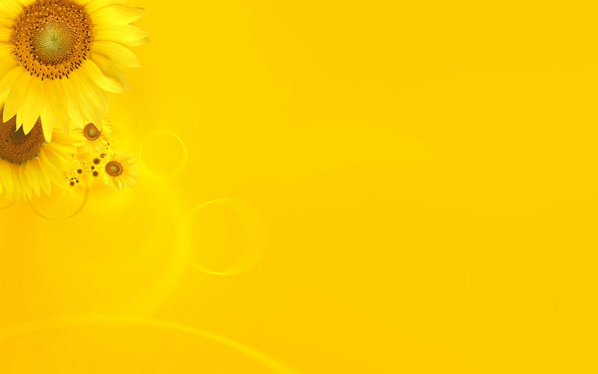 Sfondi Luce Del Sole Fiori Minimalismo Piante Giallo Polline