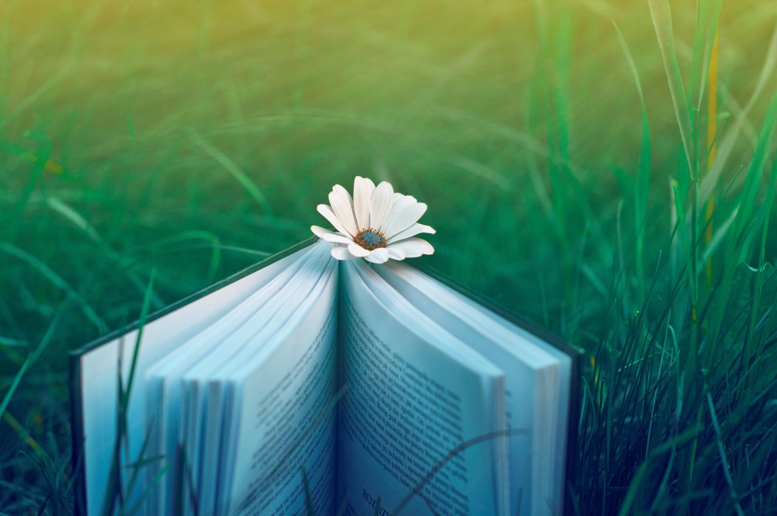 Sunlight Flowers Nature Grass Green Blue Light Color Leaf Flower Plant Mood Flora Book Computer Wallpaper