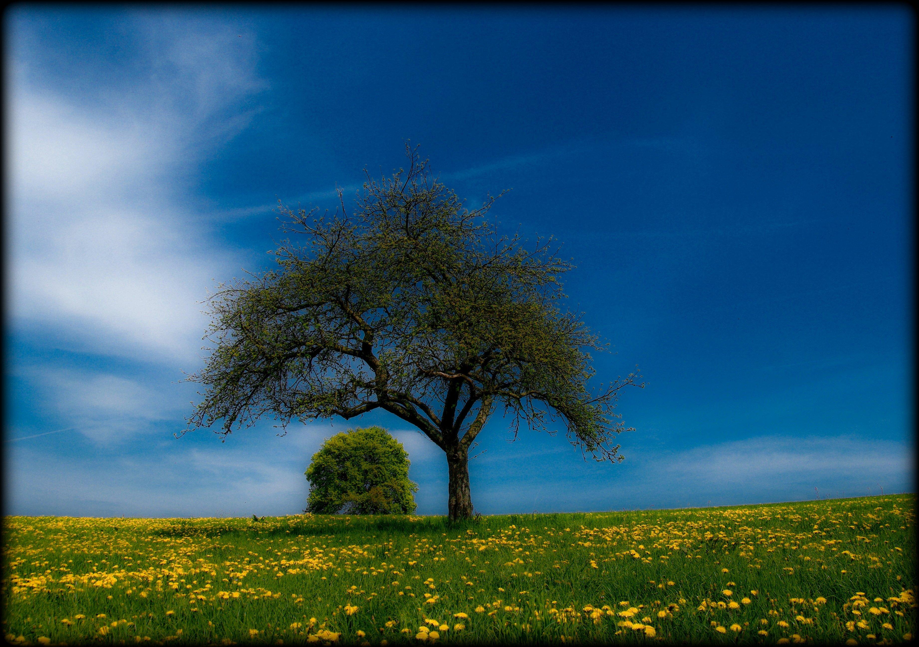 Papel de parede luz solar flores natureza grama cu campo luz solar flores natureza grama cu campo verde manh alemanha dom horizonte primavera nuvem rvore outono thecheapjerseys Choice Image