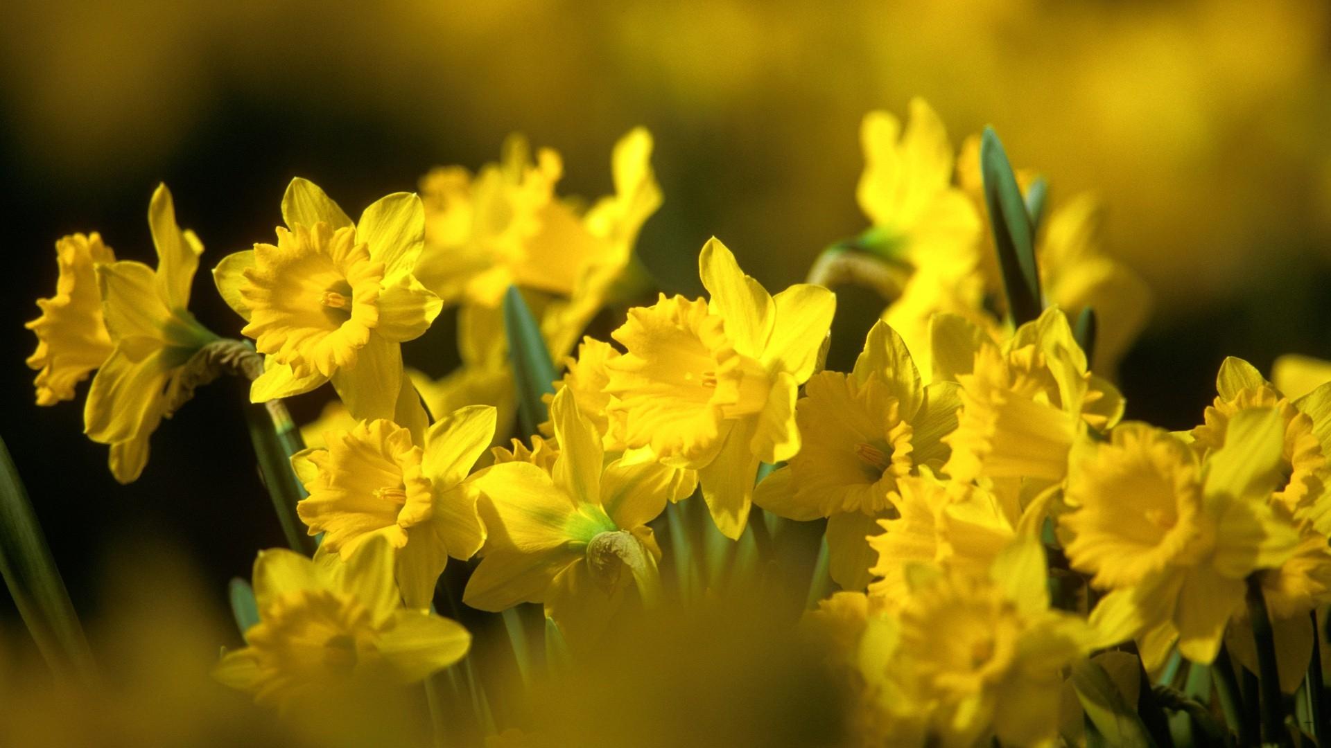 wallpaper : sunlight, flowers, nature, yellow, blurred, blossom