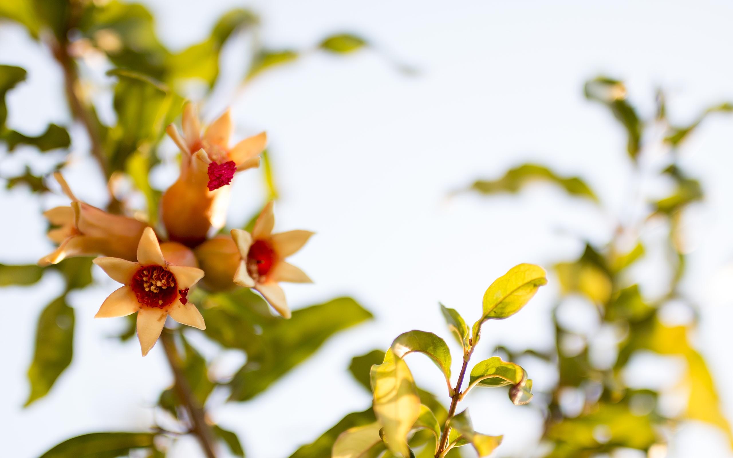 hintergrundbilder sonnenlicht blumen natur pflanzen ast gr n gelb bl hen fr hling. Black Bedroom Furniture Sets. Home Design Ideas