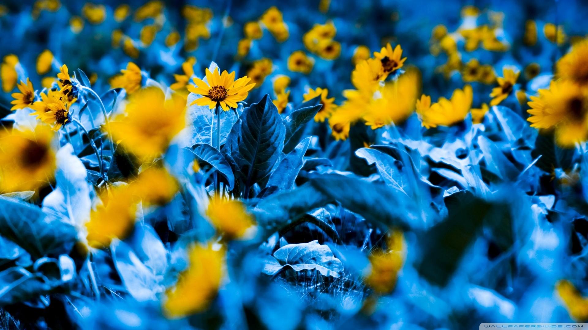 прическа картинки желтые цветы на синем фоне вам повезло