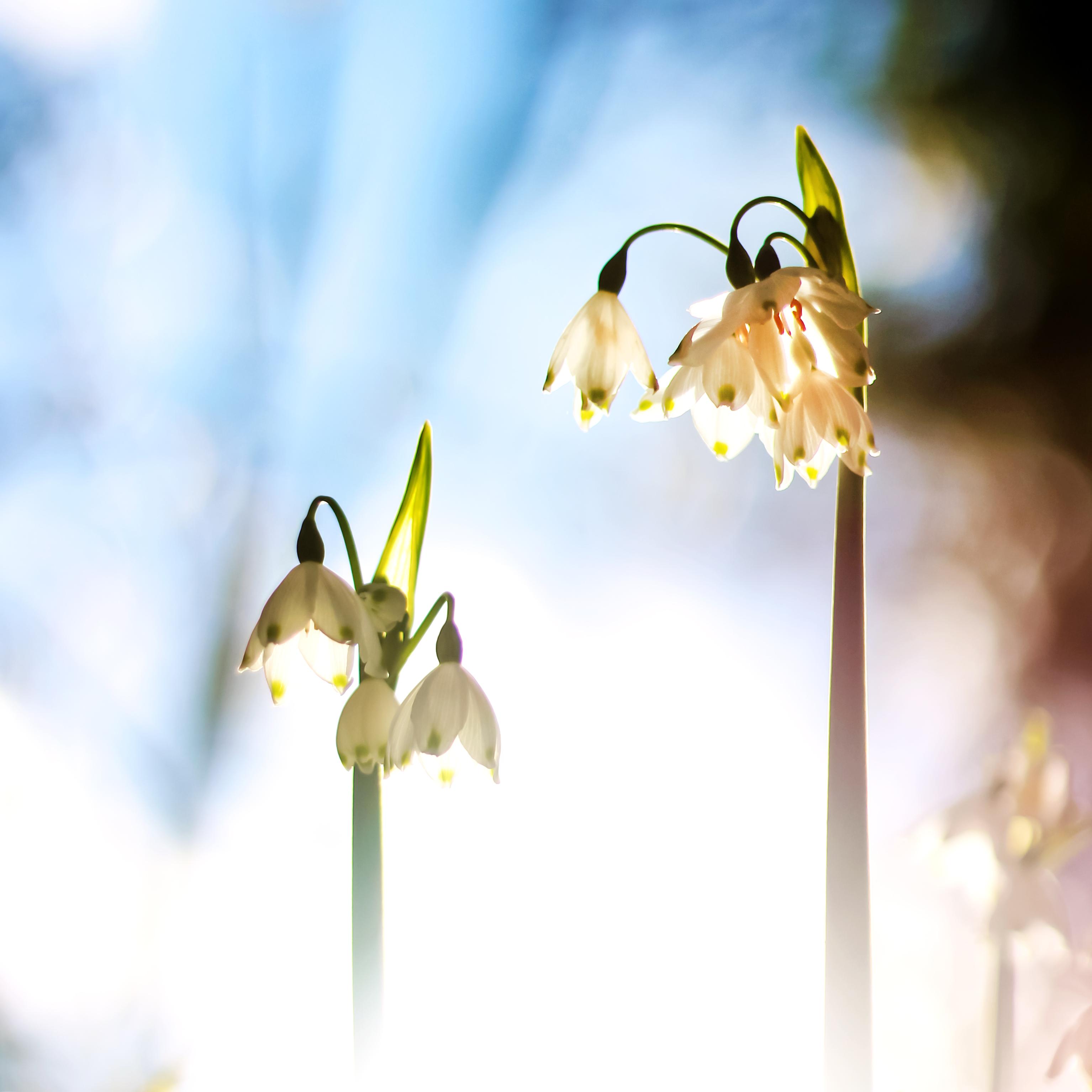 foto de Fond d'écran : lumière du soleil, la photographie, branche, jaune ...