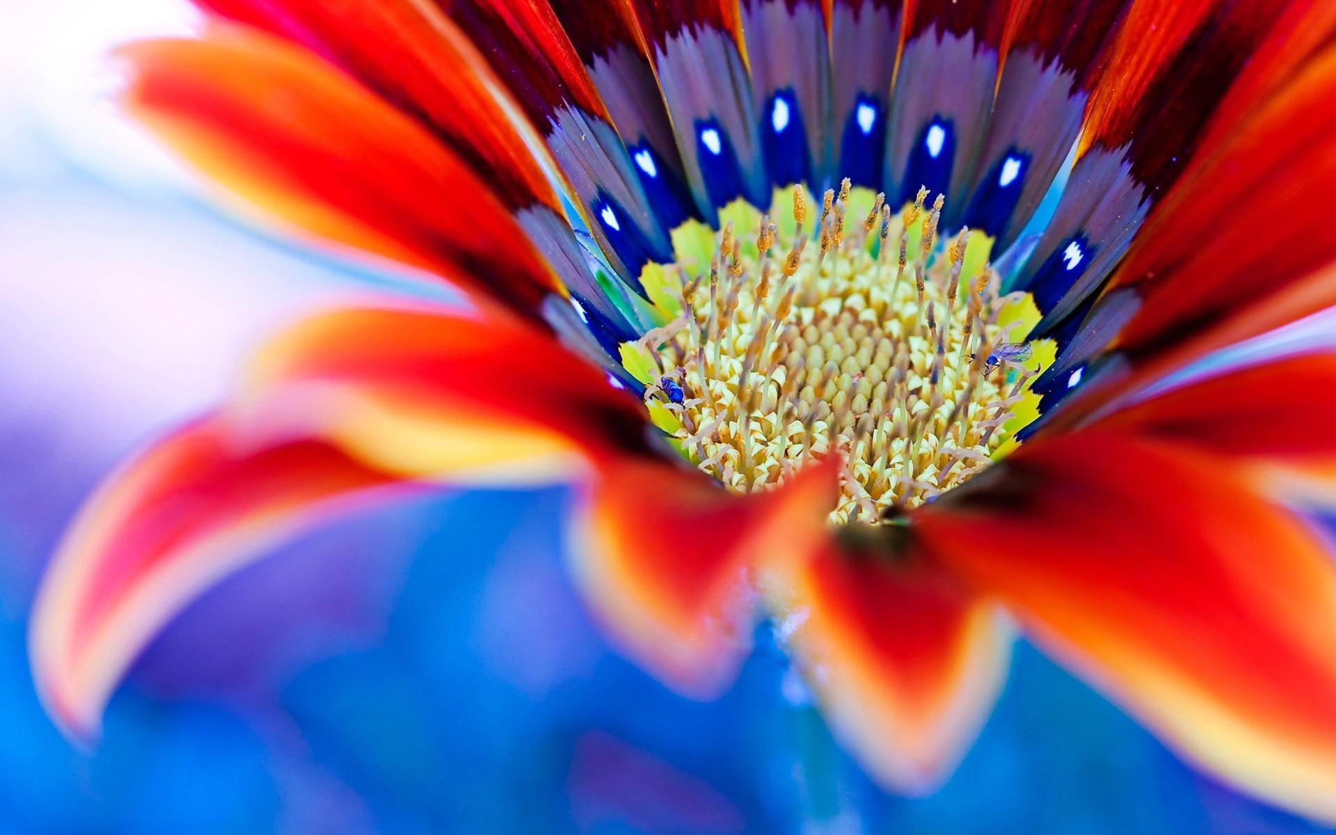 Wallpaper : sunlight, flowers, plants, yellow, blue, pollen, color ...