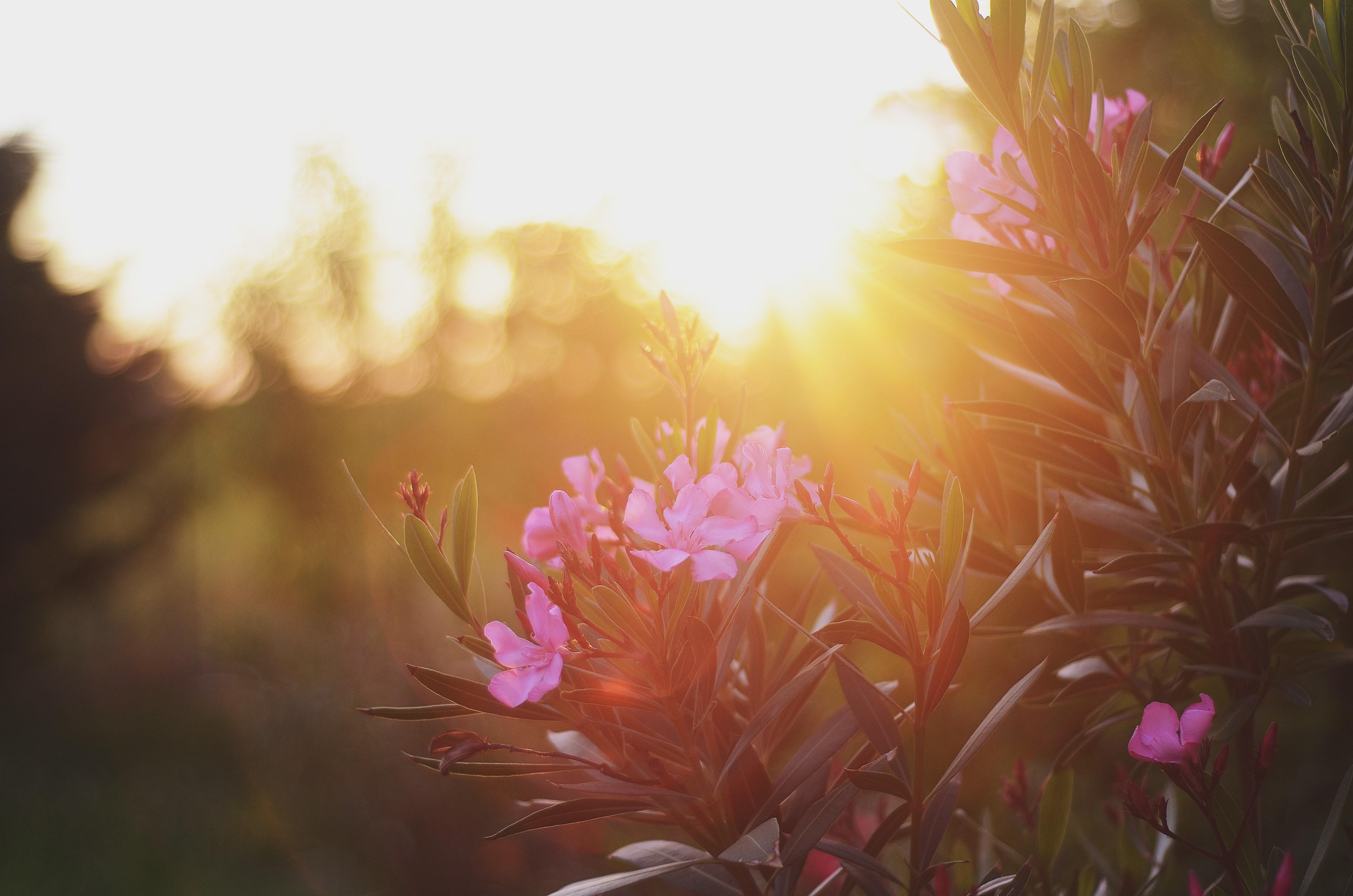 Wallpaper Sunlight Flowers Sky Plants Morning Pink Spring