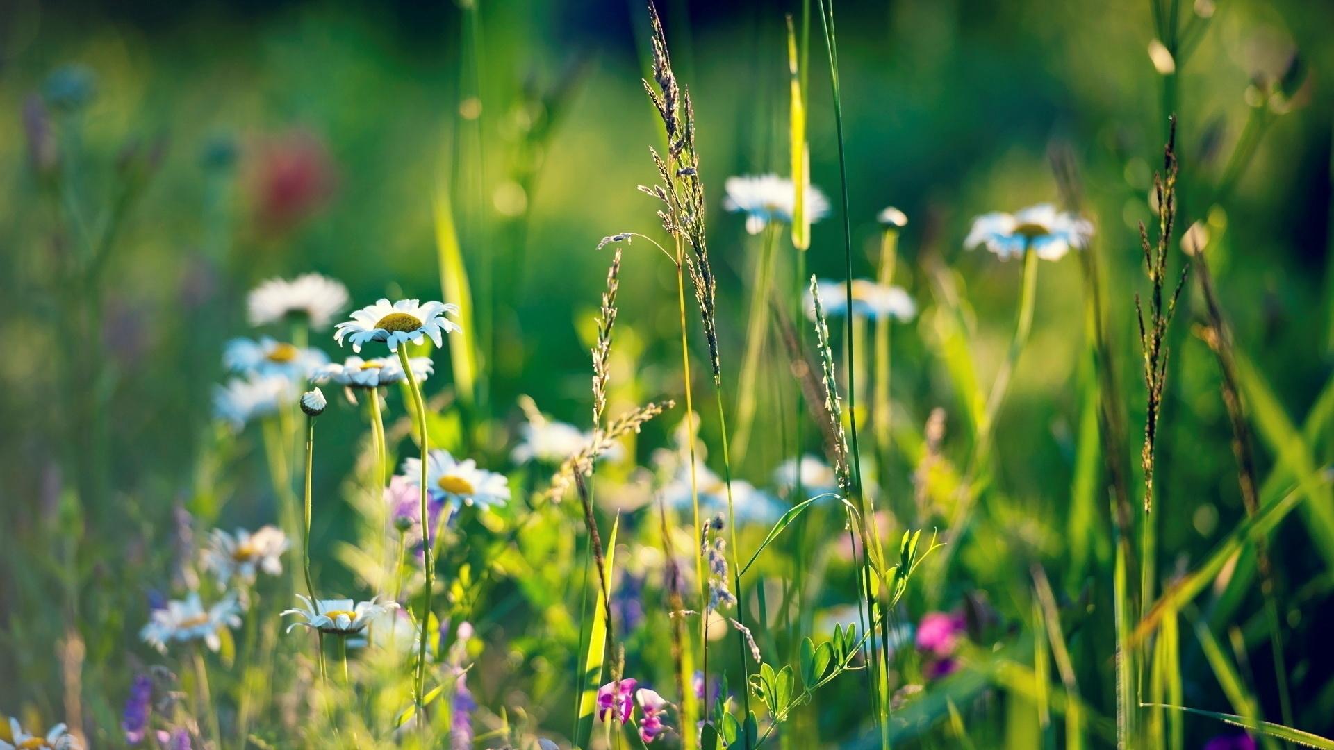картинки травы полевые лекарственные красивого лососево-розового цвета