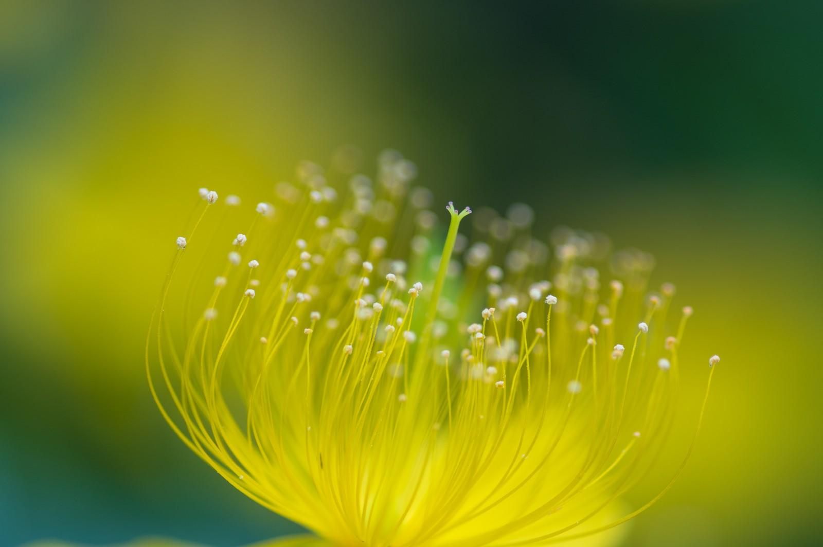 Wallpaper Sinar Matahari Bunga Bunga Alam Rumput Tetes Air