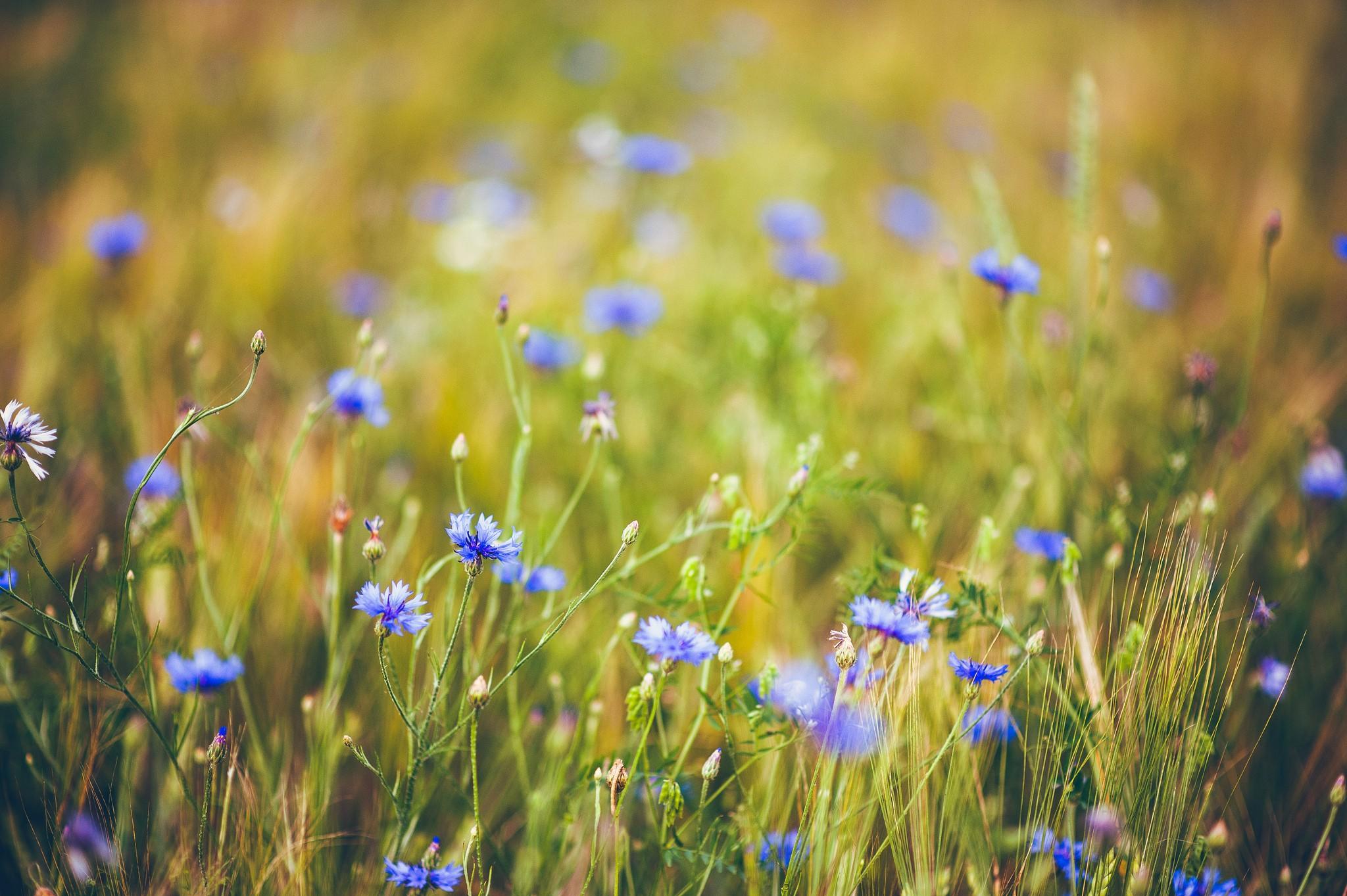 Полевые цветы профессиональные фото