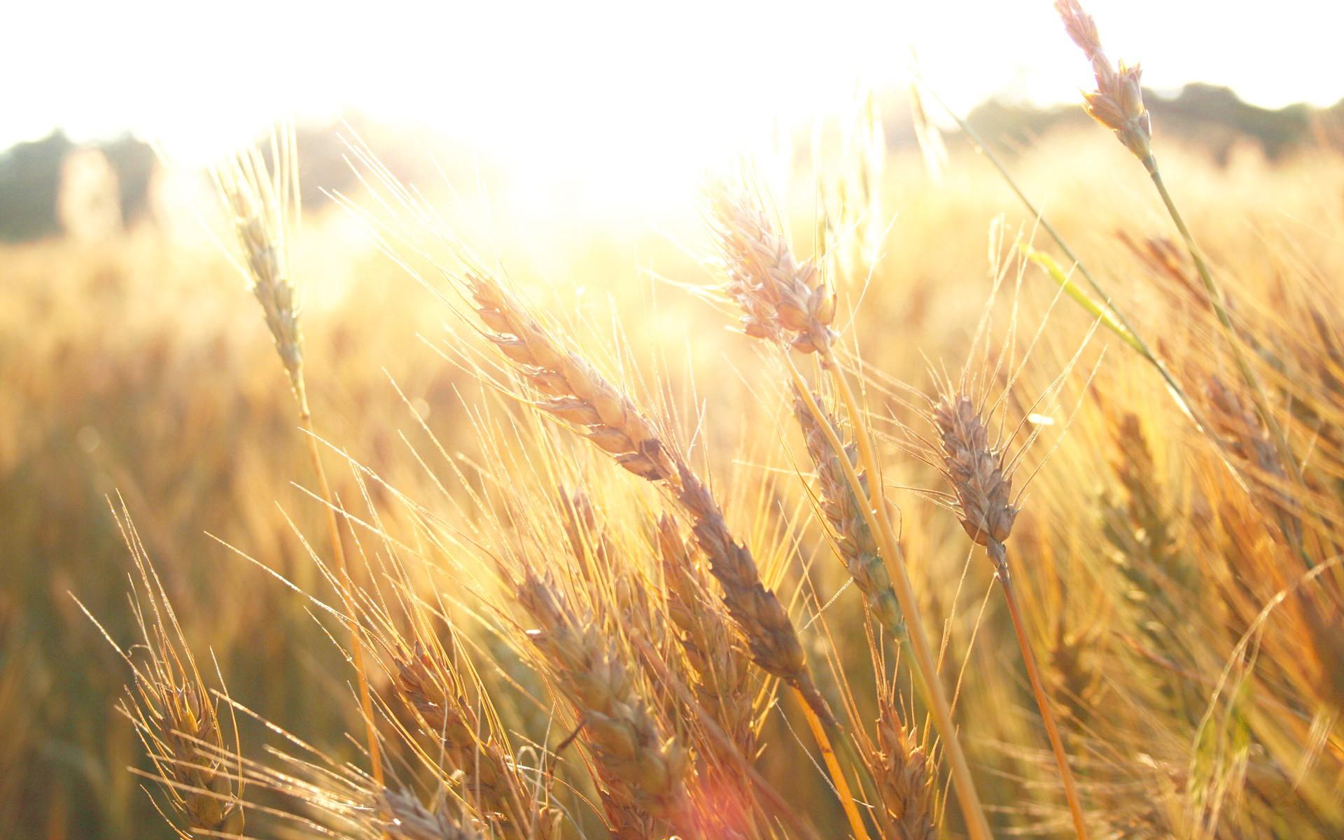 Fondos De Pantalla Luz De Sol C 233 Sped Plantas Campo