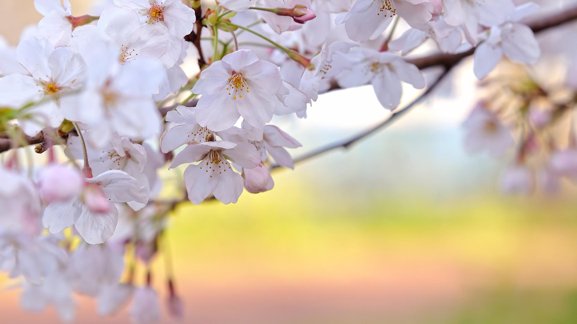 Красивые обои на раб стол весна