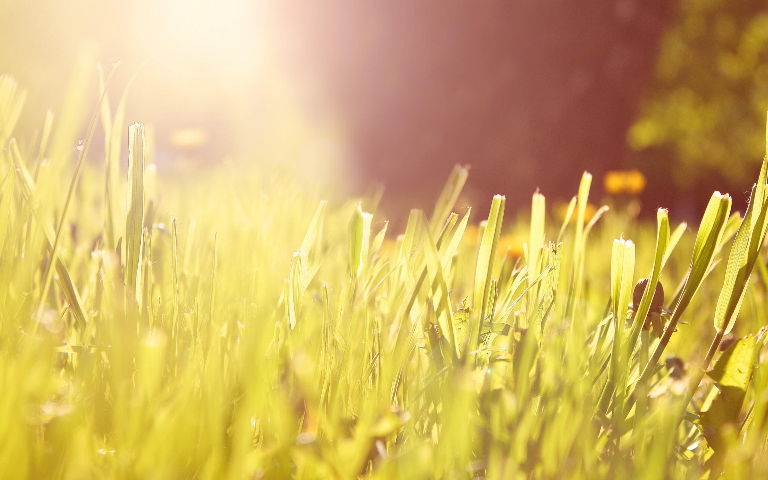 прямо лучи солнца на траве картинки открытки рамки