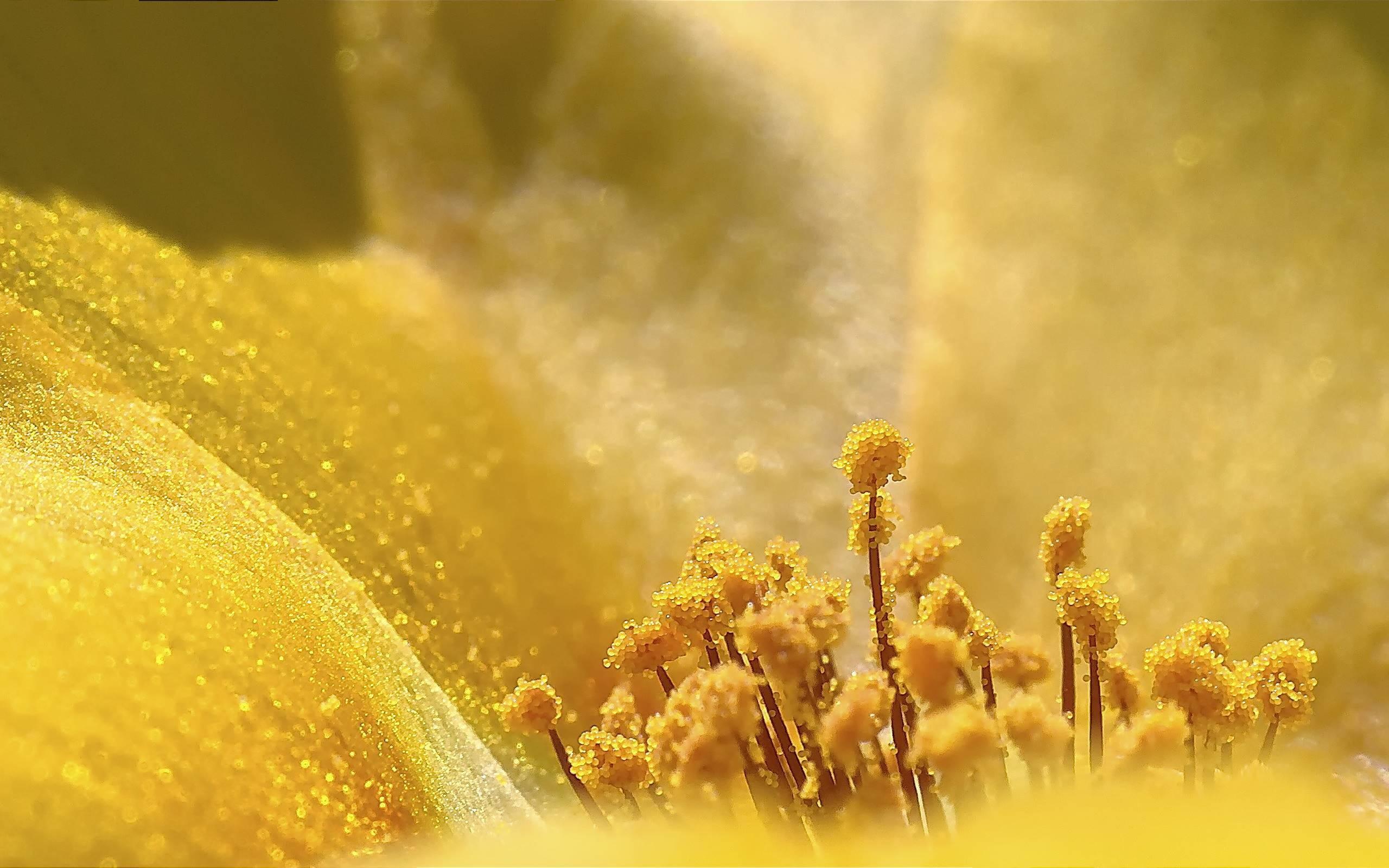 это пыльца цветов фото таких черенок можно