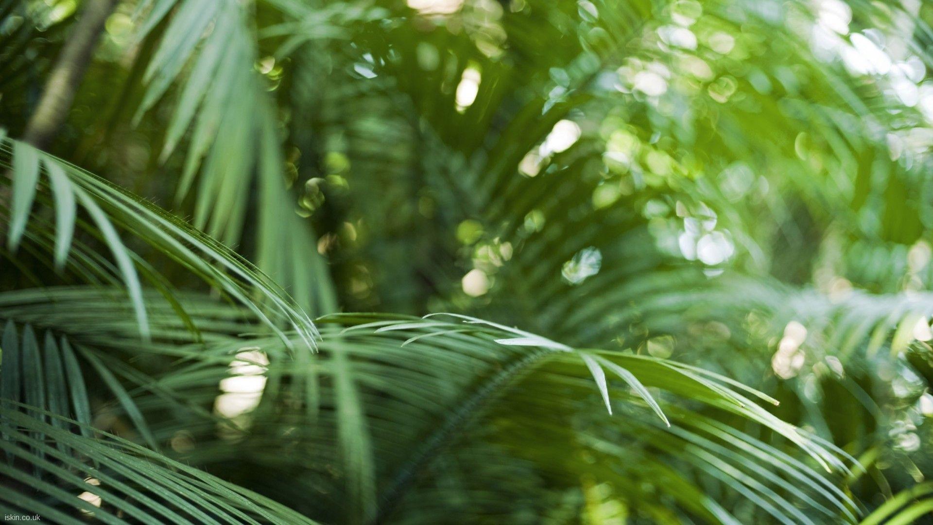 hintergrundbilder sonnenlicht wald tiefensch rfe garten natur gras pflanzen fotografie. Black Bedroom Furniture Sets. Home Design Ideas