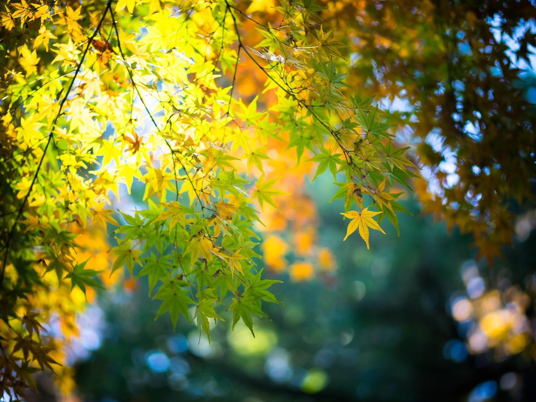 Солнце листья желтые очень красивые фото