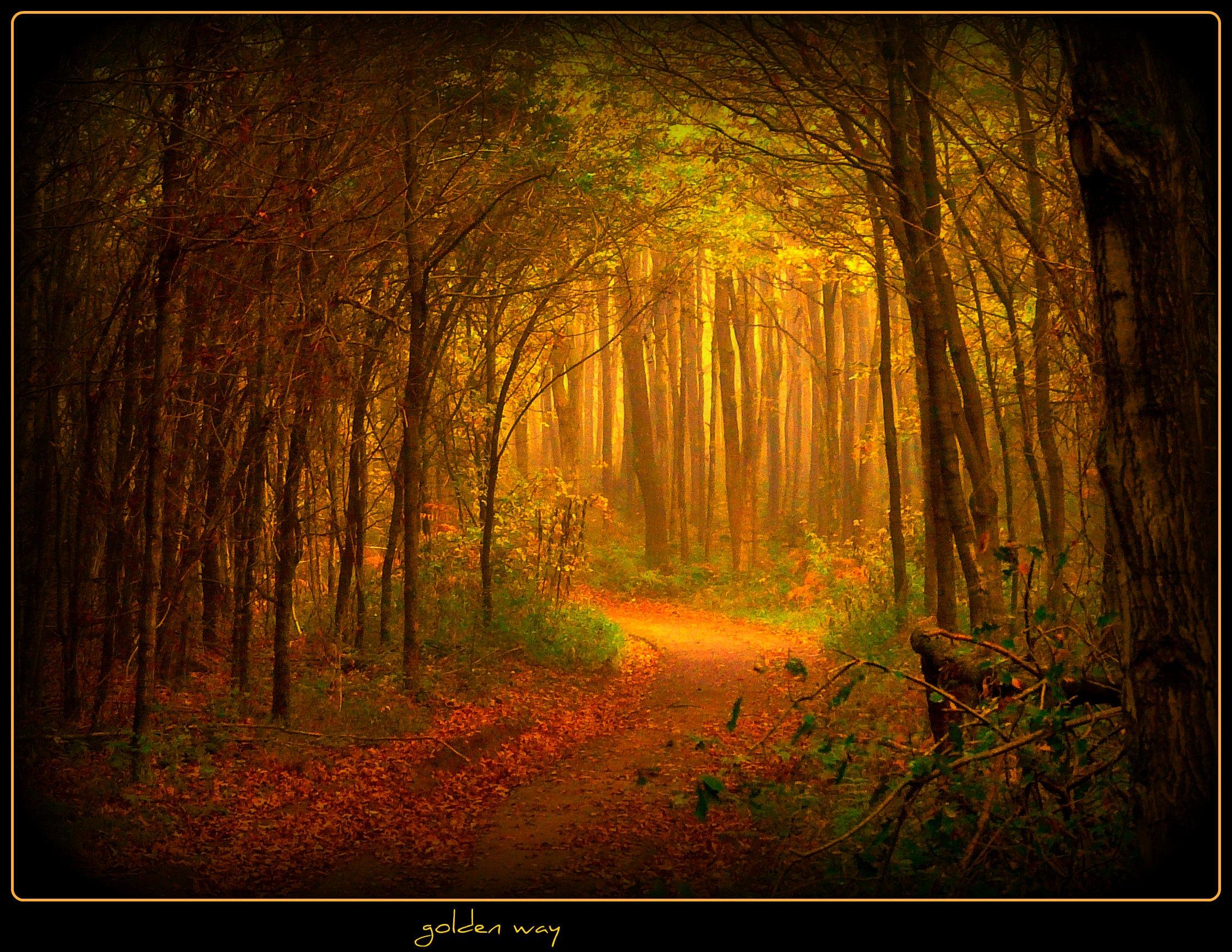 Holz Siegburg hintergrundbilder sonnenlicht wald fallen natur holz