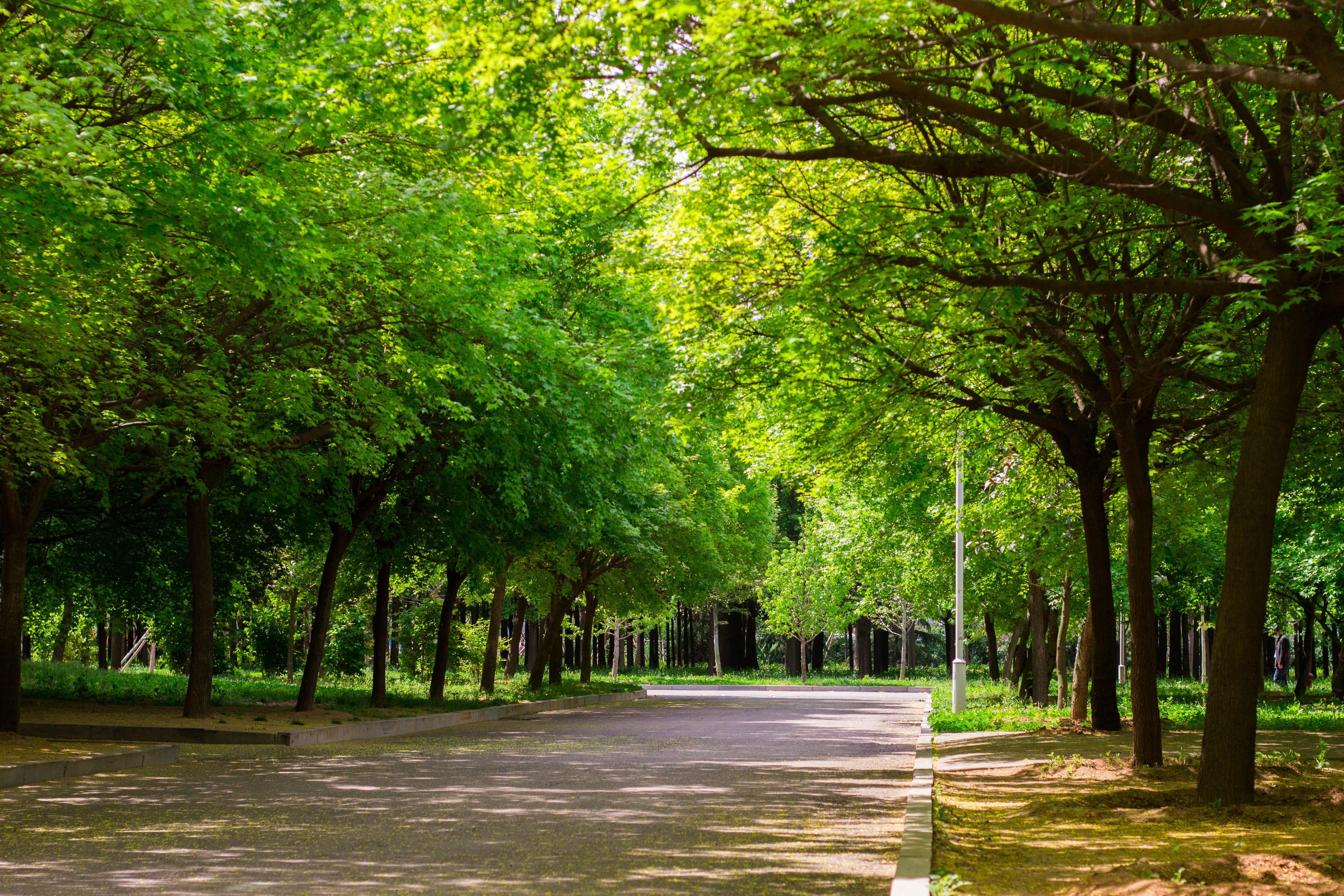 данном картинки деревьев на улицах проекты дизайн-проектом