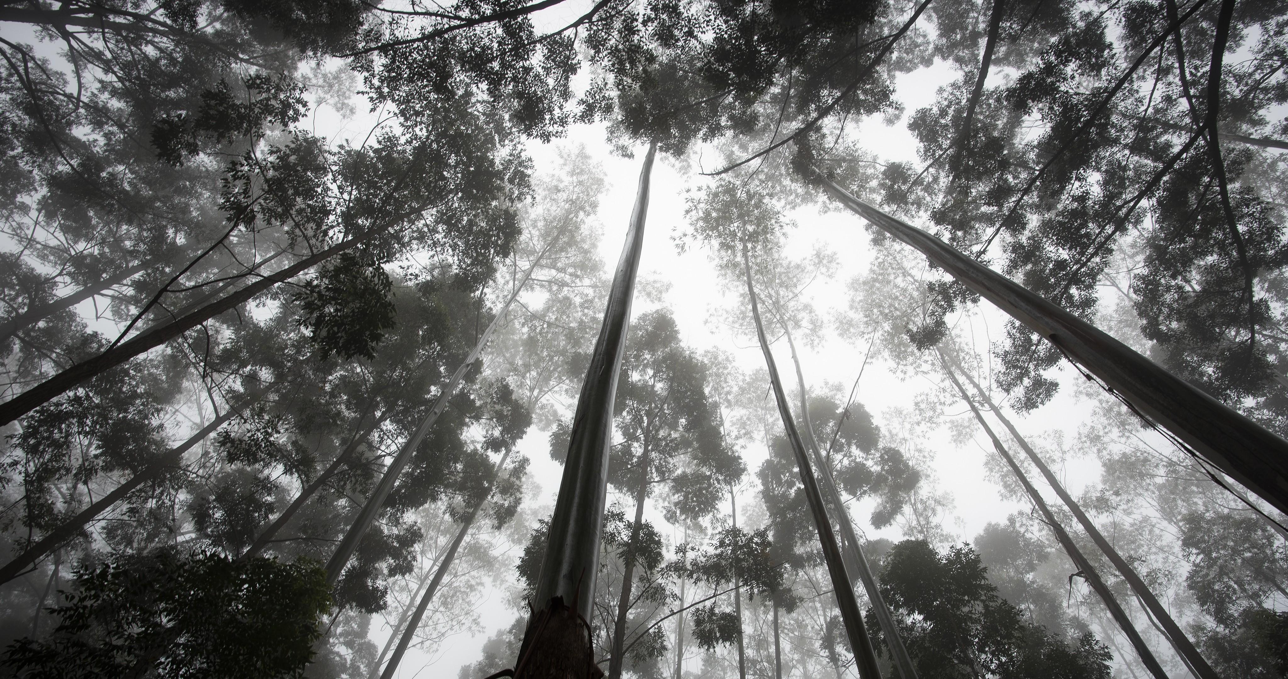 Wallpaper Sunlight Nature Sky Branch Jungle