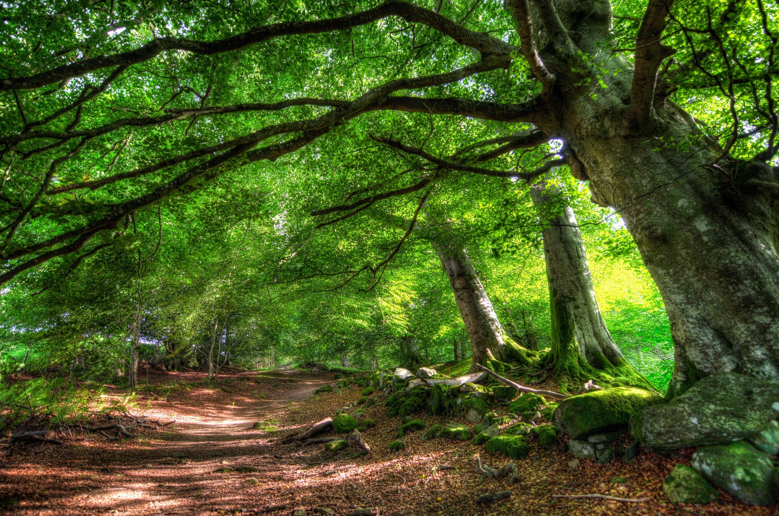Картинки природы лес качестве