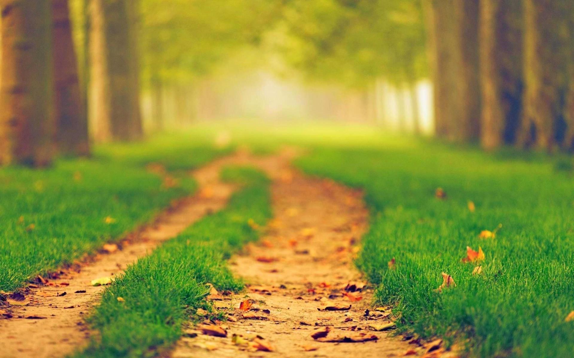 Hintergrundbilder sonnenlicht wald natur gras feld for Boden desktop