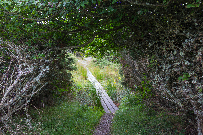 Wallpaper Sinar Matahari Alam Rumput Rimba Aliran Path Hutan