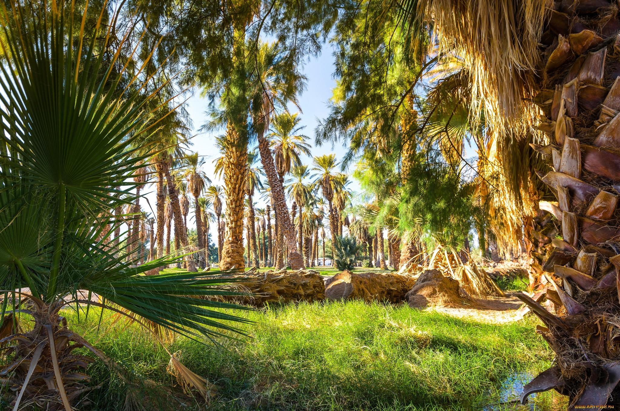 фото красивого леса с пальмами моменту нашего