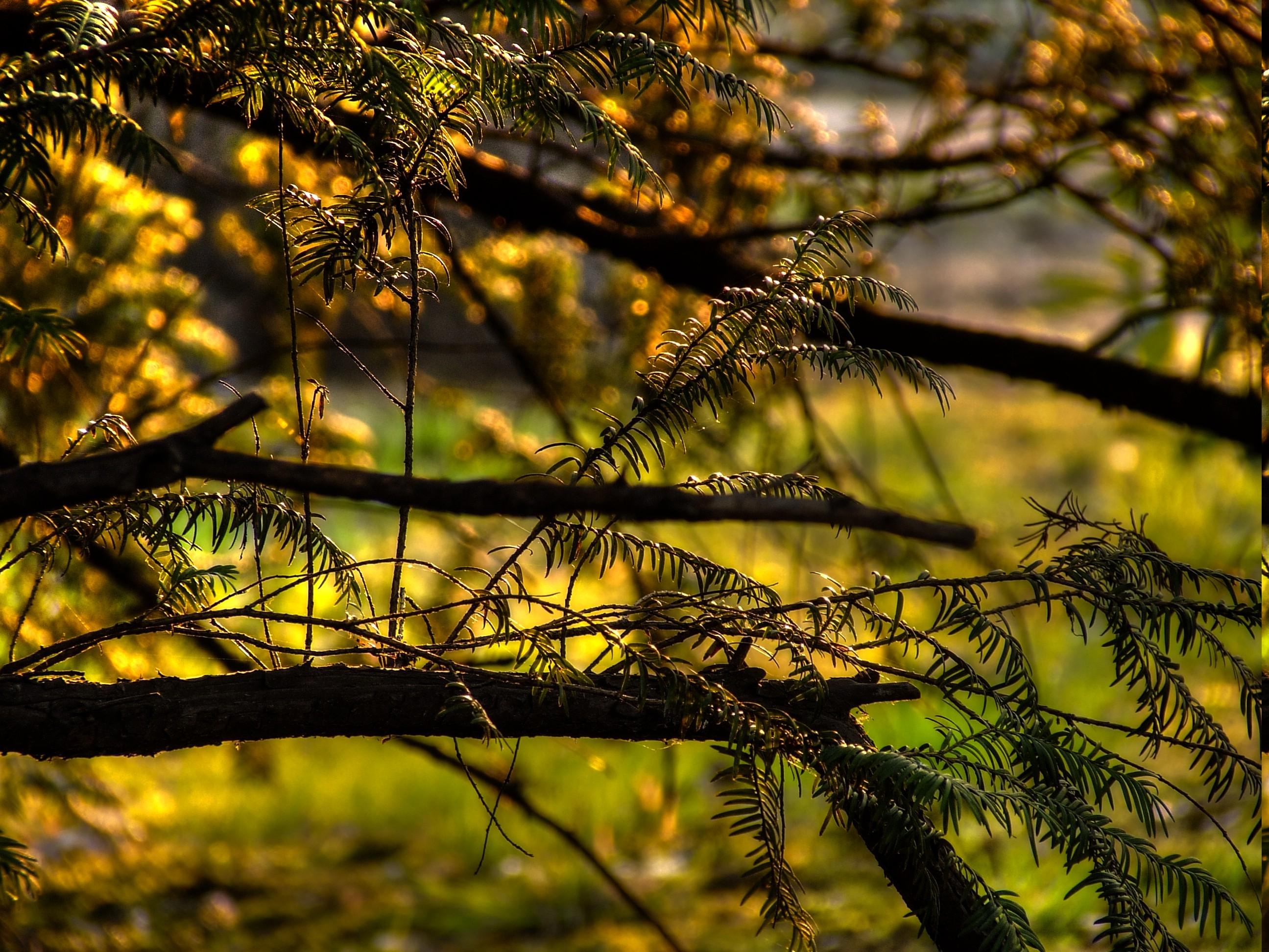 Download 43 Background Bunga Hutan Gratis Terbaik