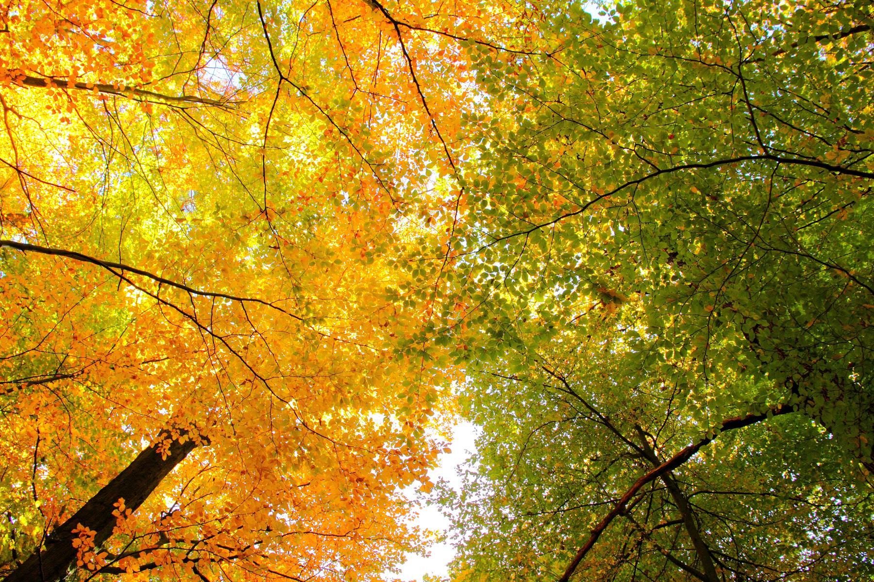 デスクトップ壁紙 日光 森林 自然 空 ブランチ 黄 カメラ