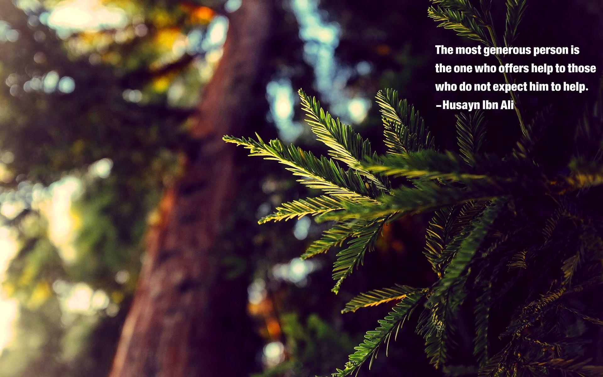 Wallpaper : Sunlight, Forest, Quote, Nature, Branch, Jungle, Rainforest,  Islam, Imam Hussain, Husayn Ibn Ali, Tree, Autumn, Leaf, Flower, Season,  Flora, ...