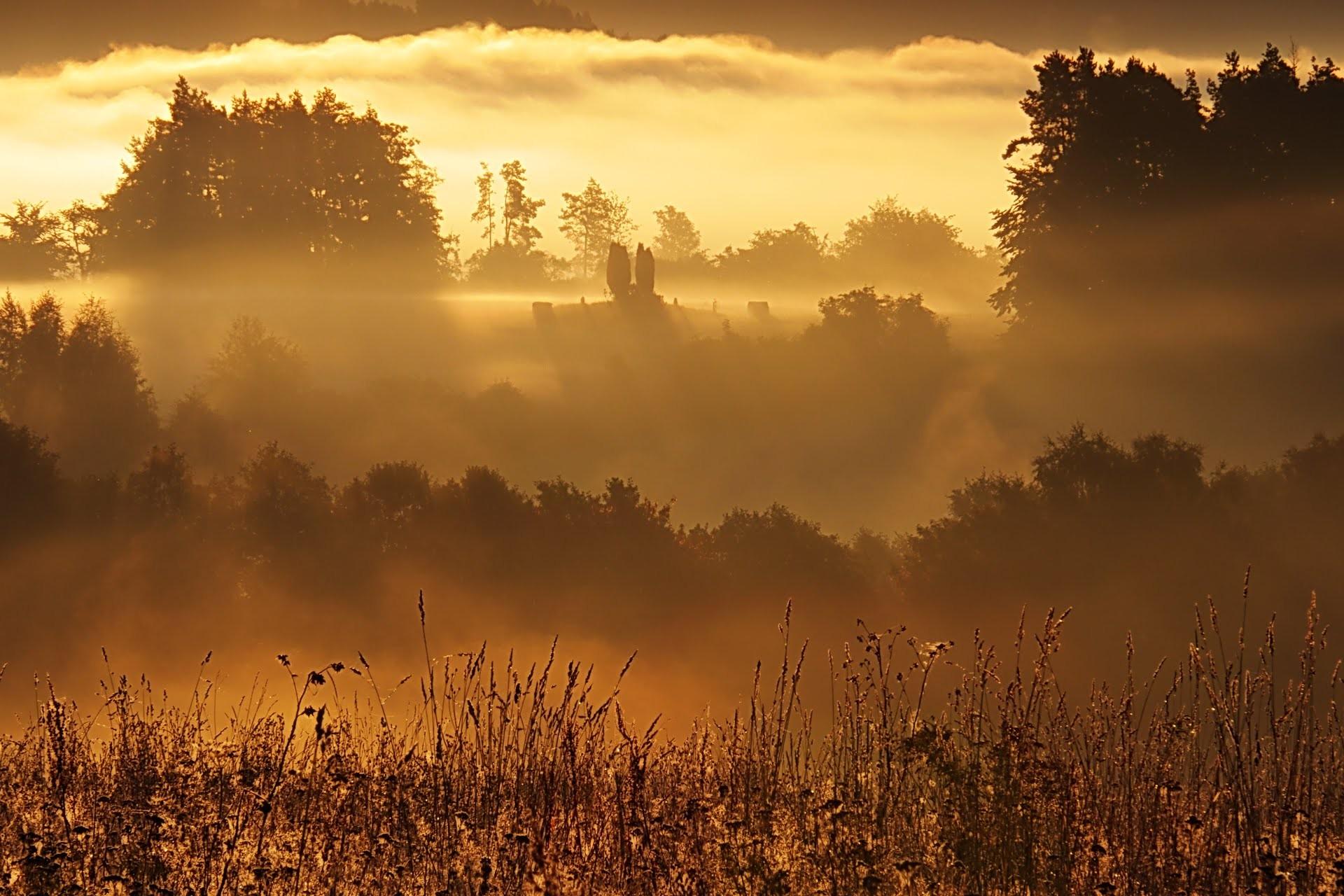 Картинки солнце над лесом