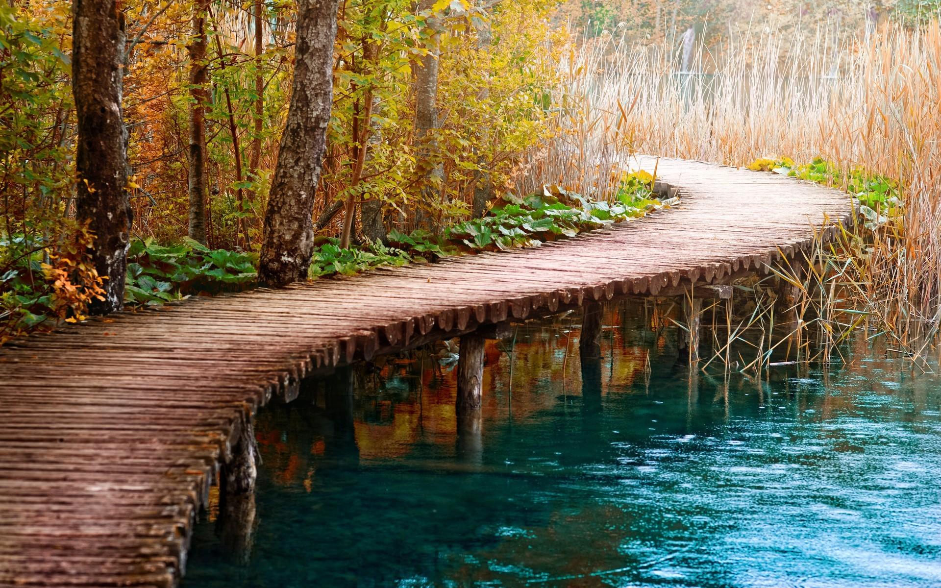 лес речка дорога фото