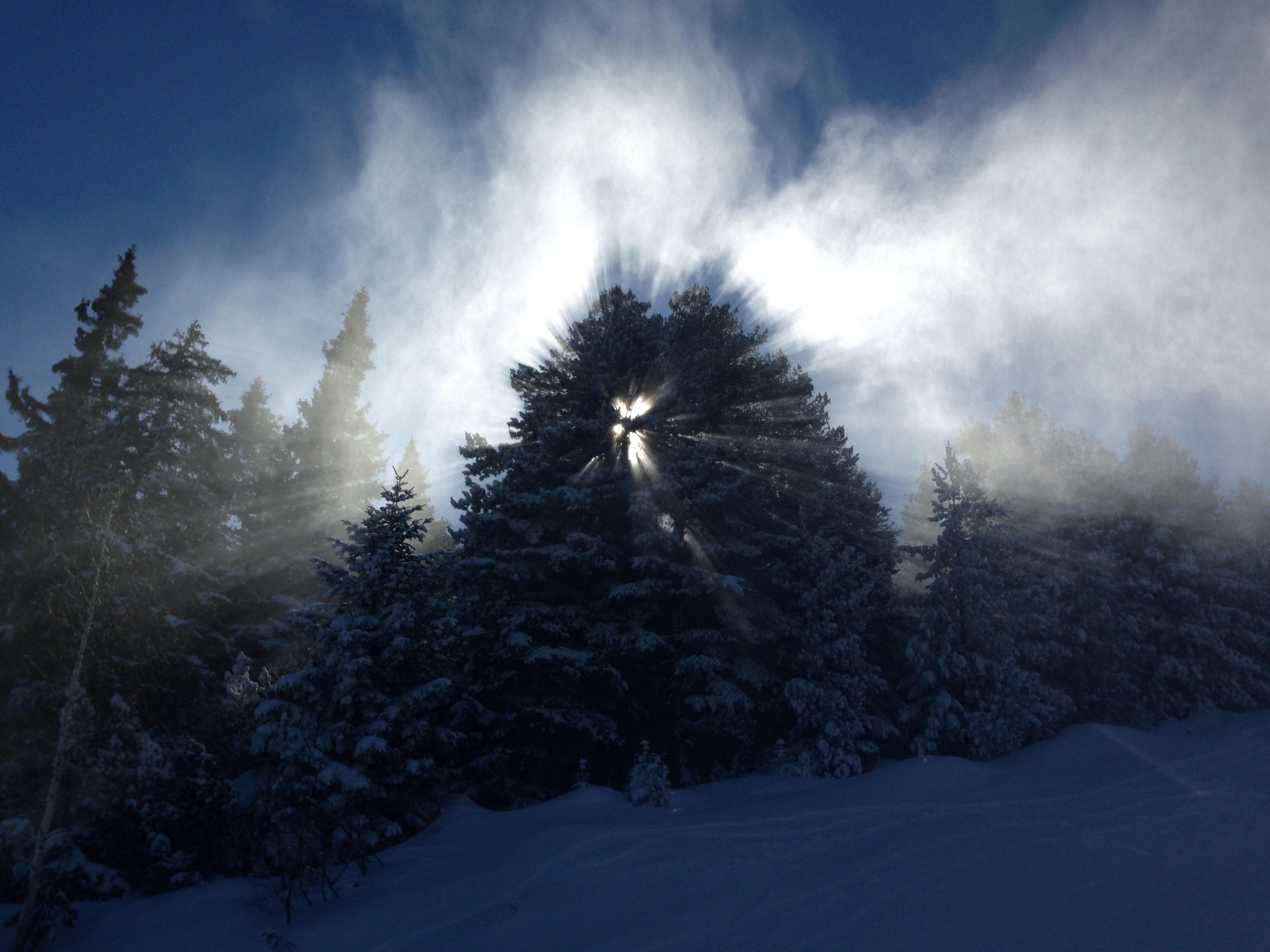 デスクトップ壁紙 日光 森林 白 自然 空 雪 冬 雲 日の出