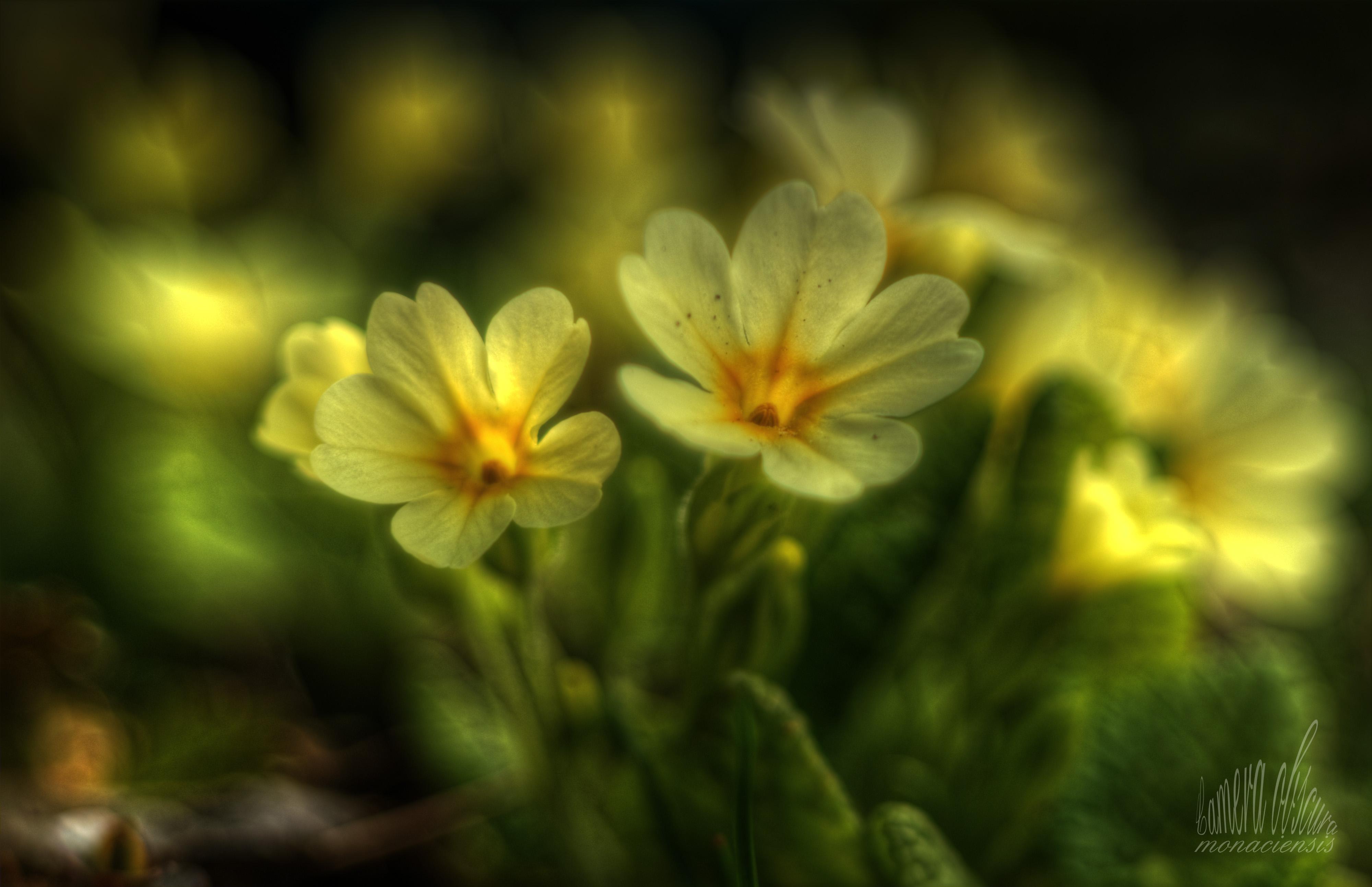 Sun Garden Gartenmobel ~ Wunderbar sun garden gartenmöbel sun garden luxus sesselauflage