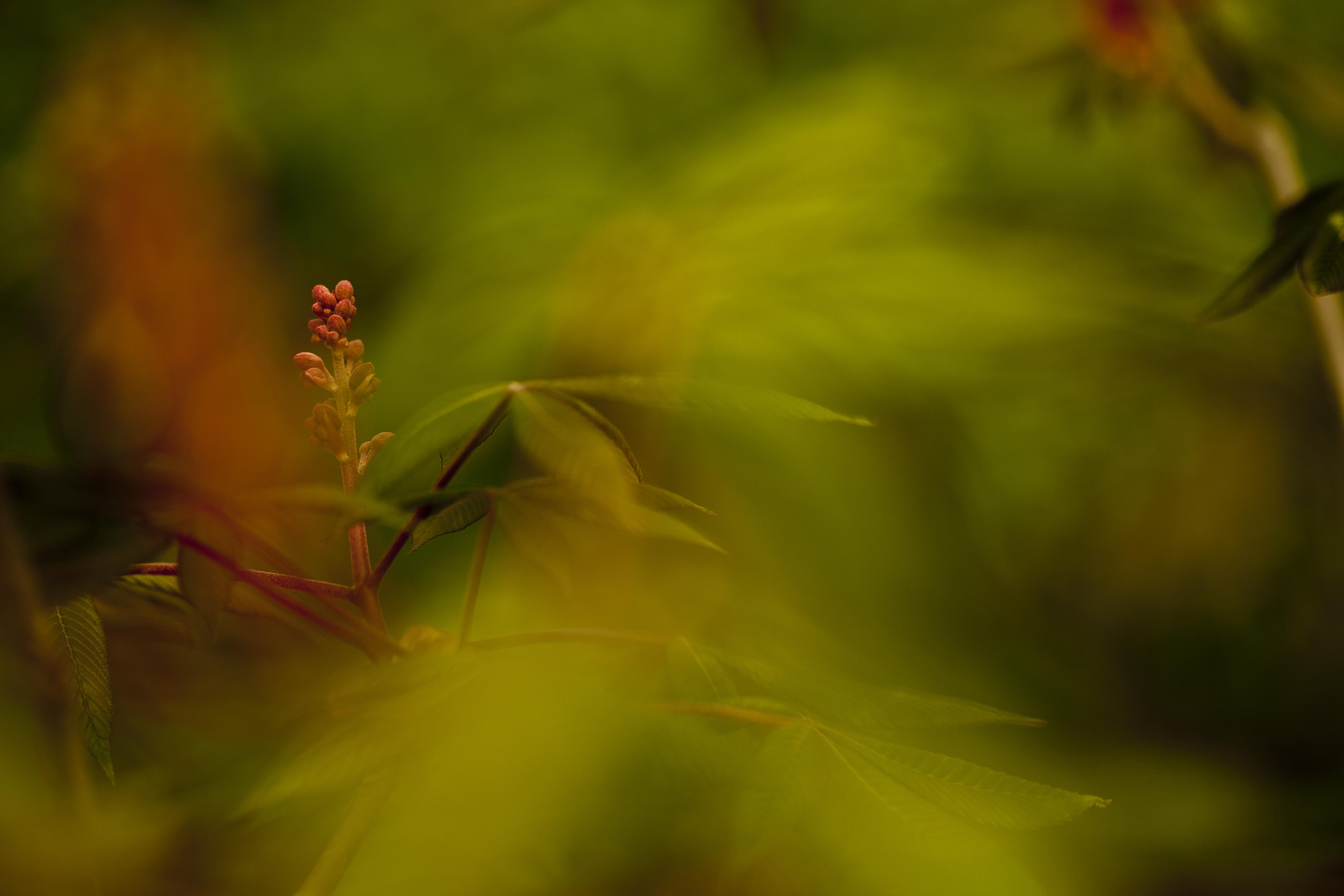 Wallpaper Sunlight Garden Nature Red Grass Branch