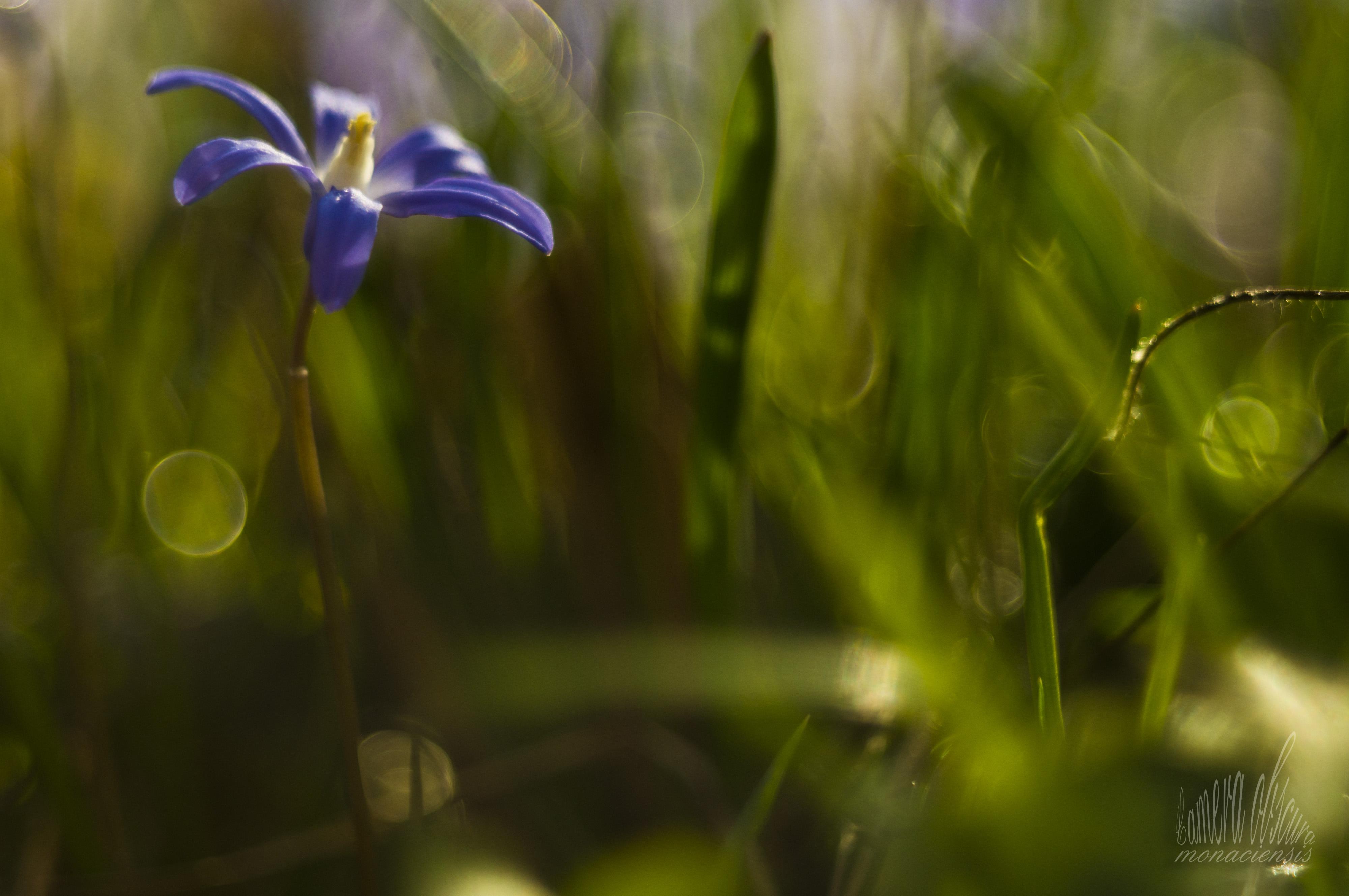 Sun Garden Gartenmobel ~ Wallpaper sunlight garden nature grass plants closeup