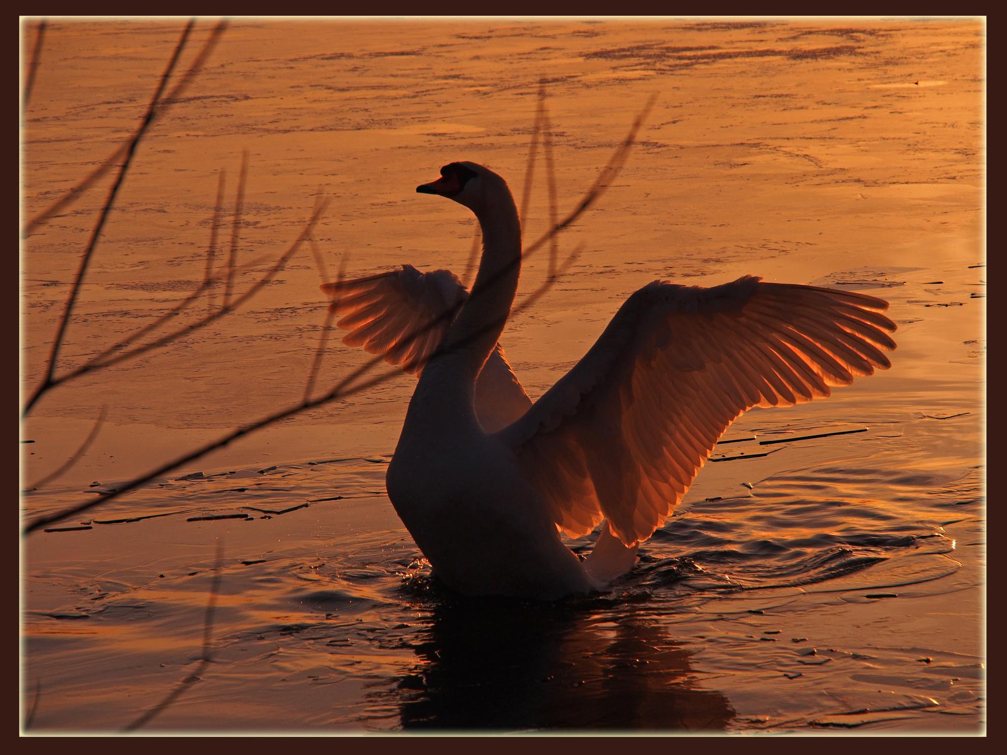работать будем фото лебеди на закате солнца время