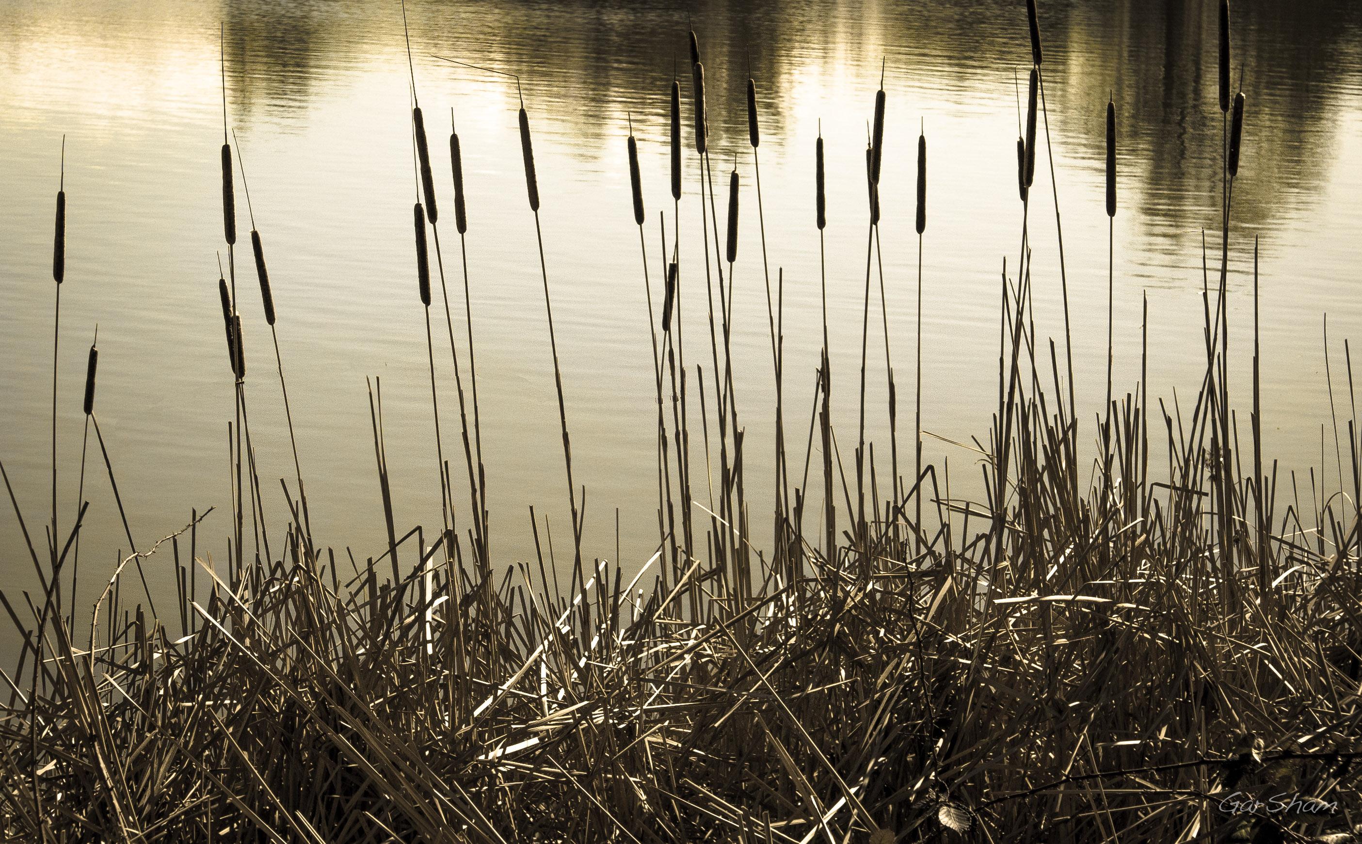 87 Gambar Abstrak Pemandangan Alam Paling Hist