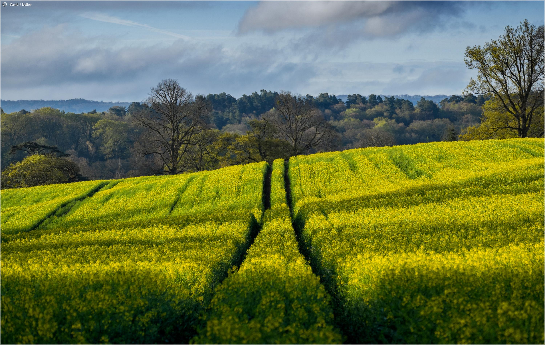 Wallpaper Sunlight Landscape Flowers Nature Sky Yellow