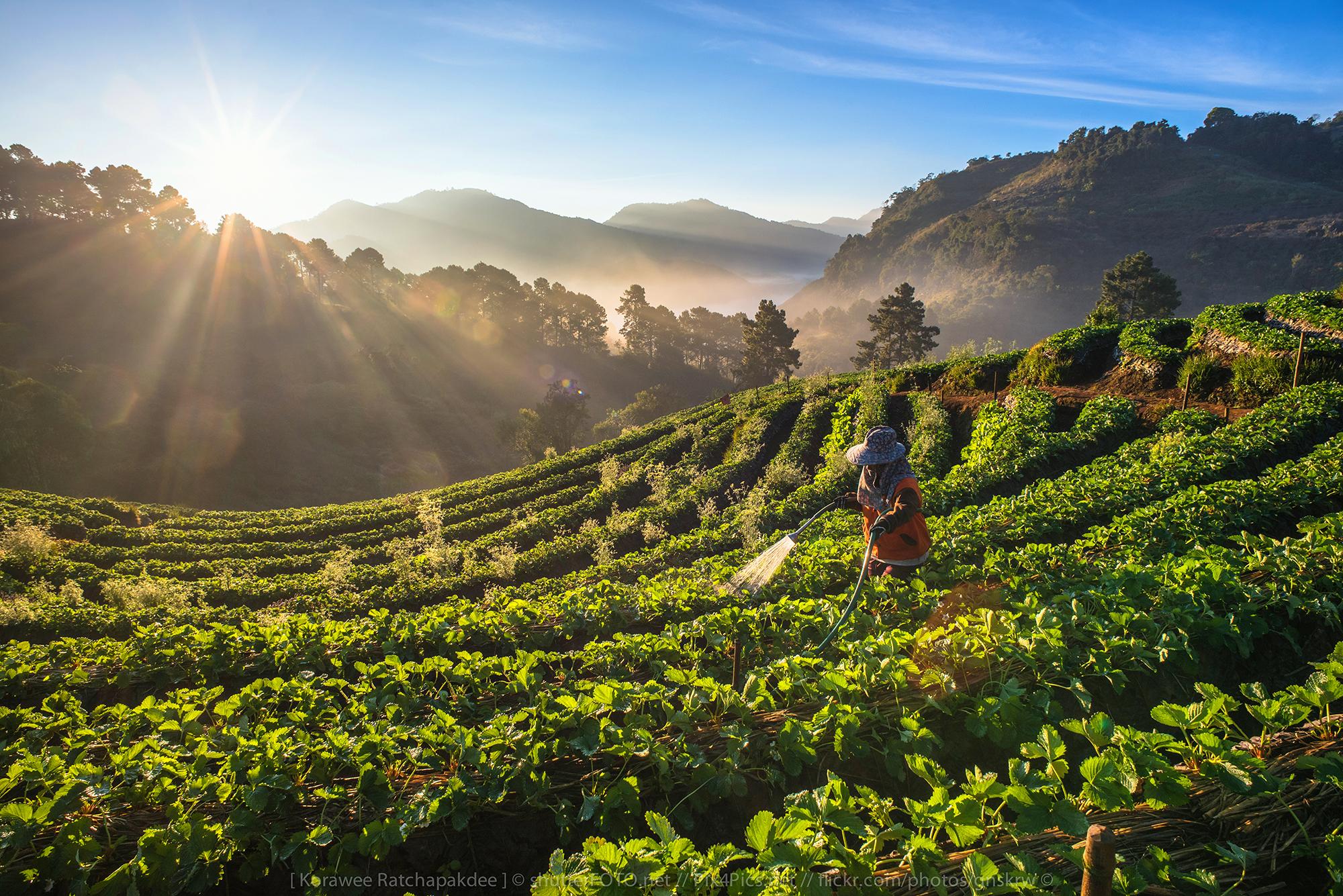 Wallpaper : sunlight, landscape, food, garden, Asia ...