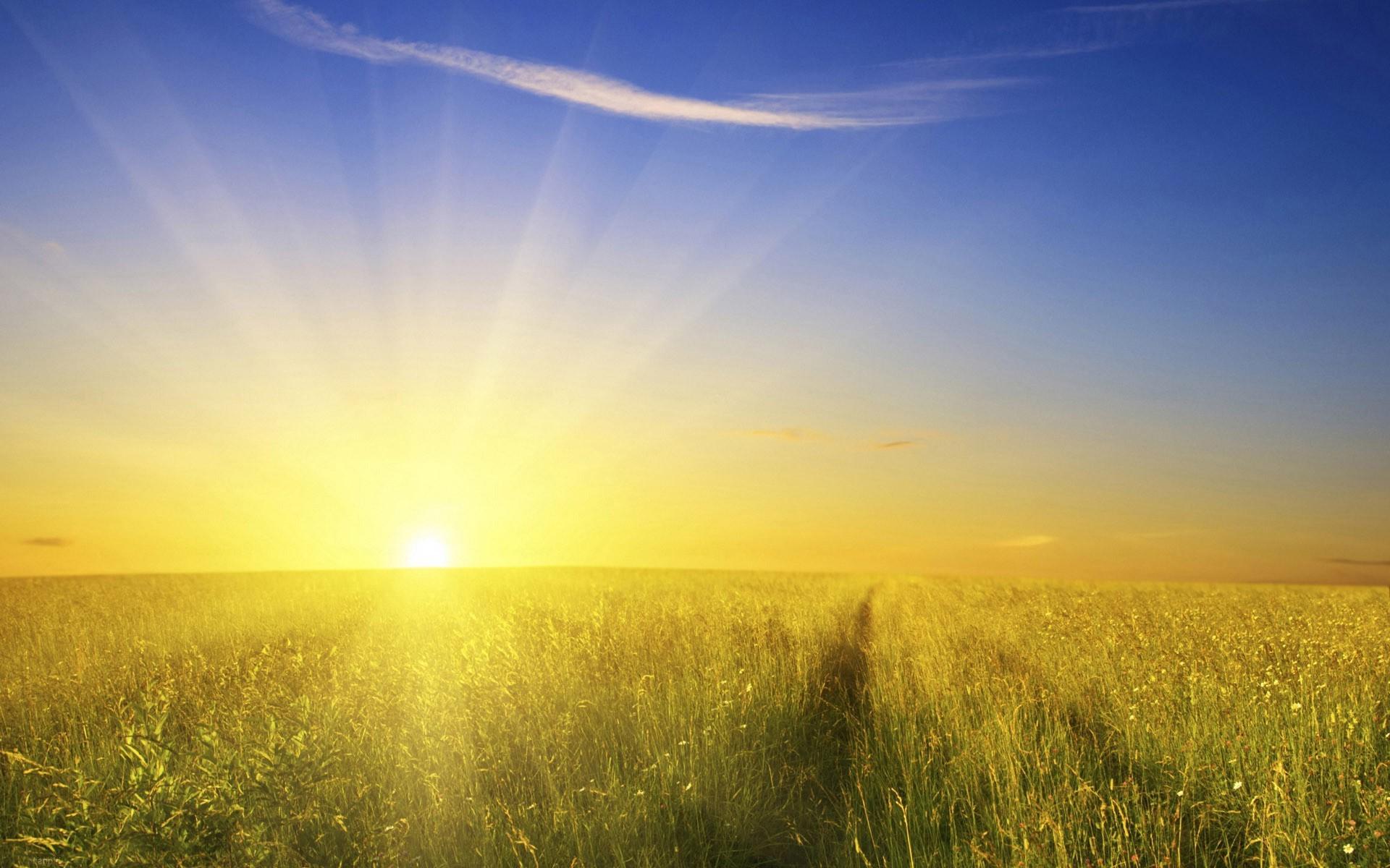 российская художница, солнце и поле фото также сильно